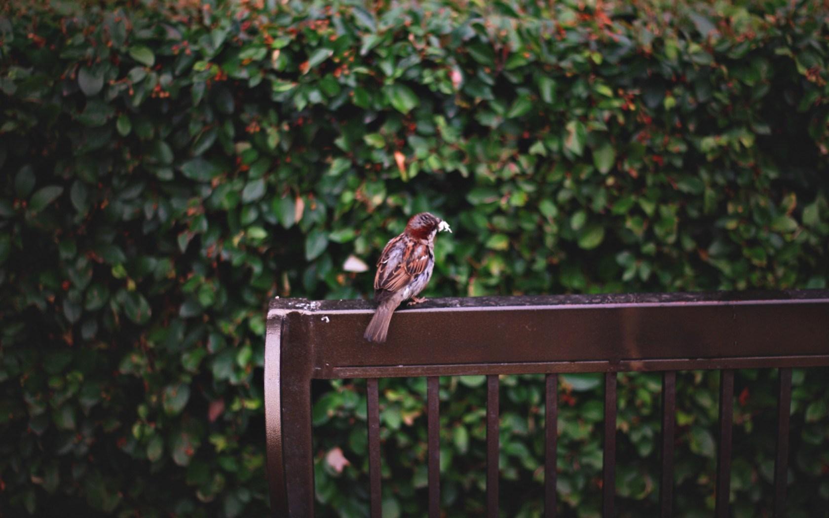Sparrow Bench