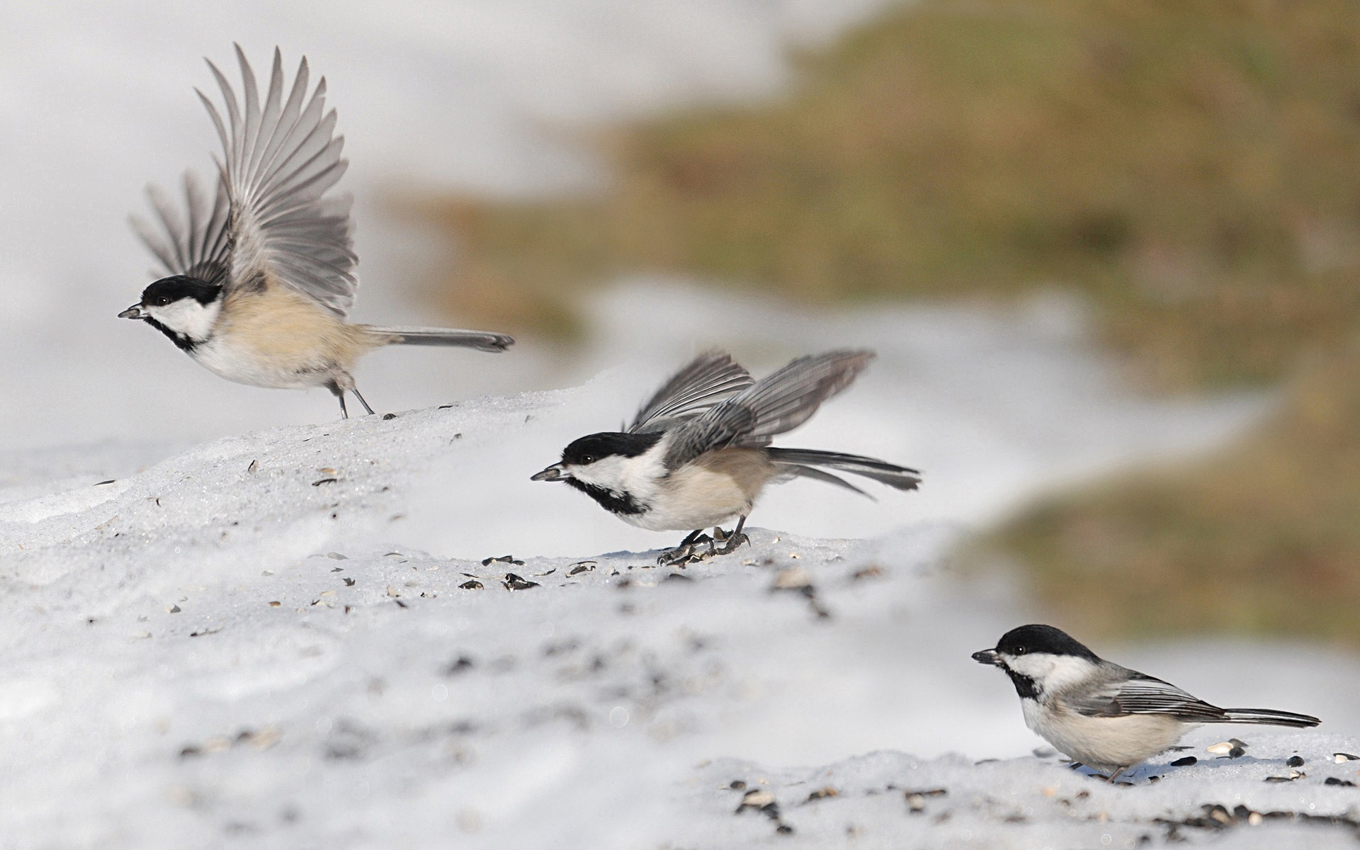 Sparrows Birds Fly