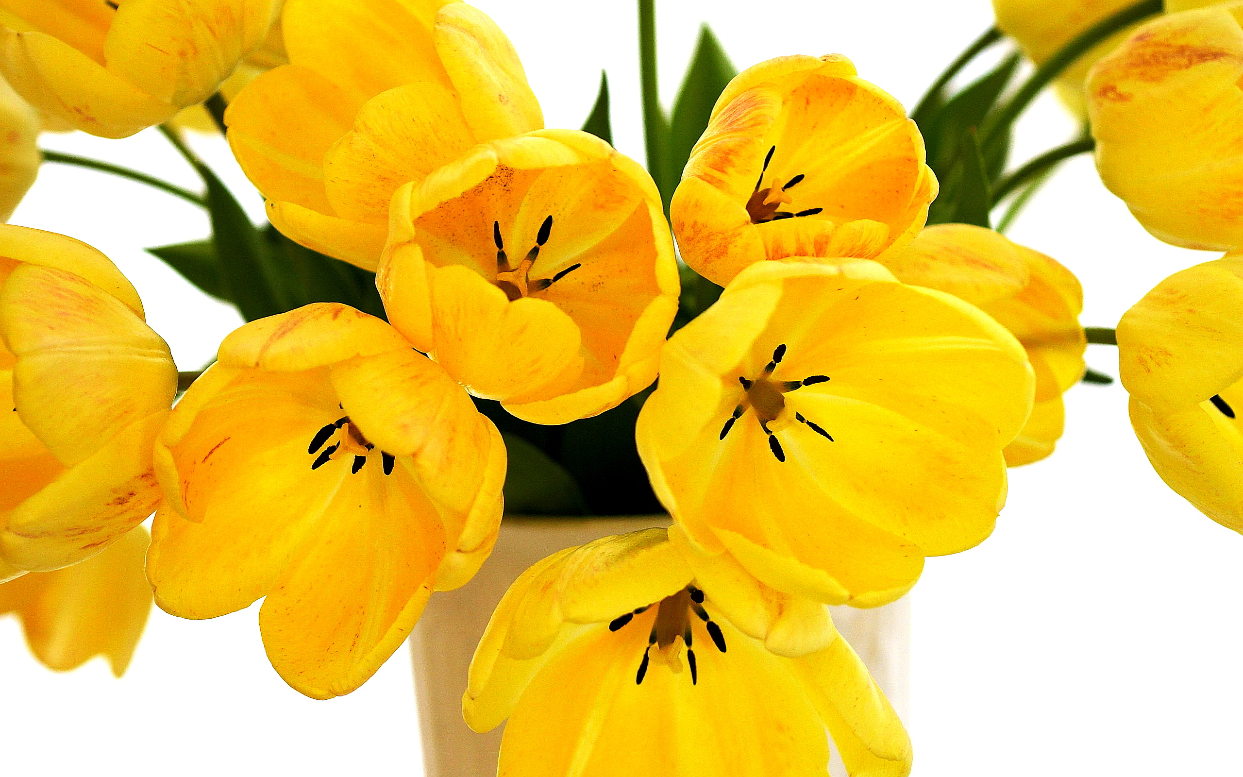 Speckled Yellow Tulips