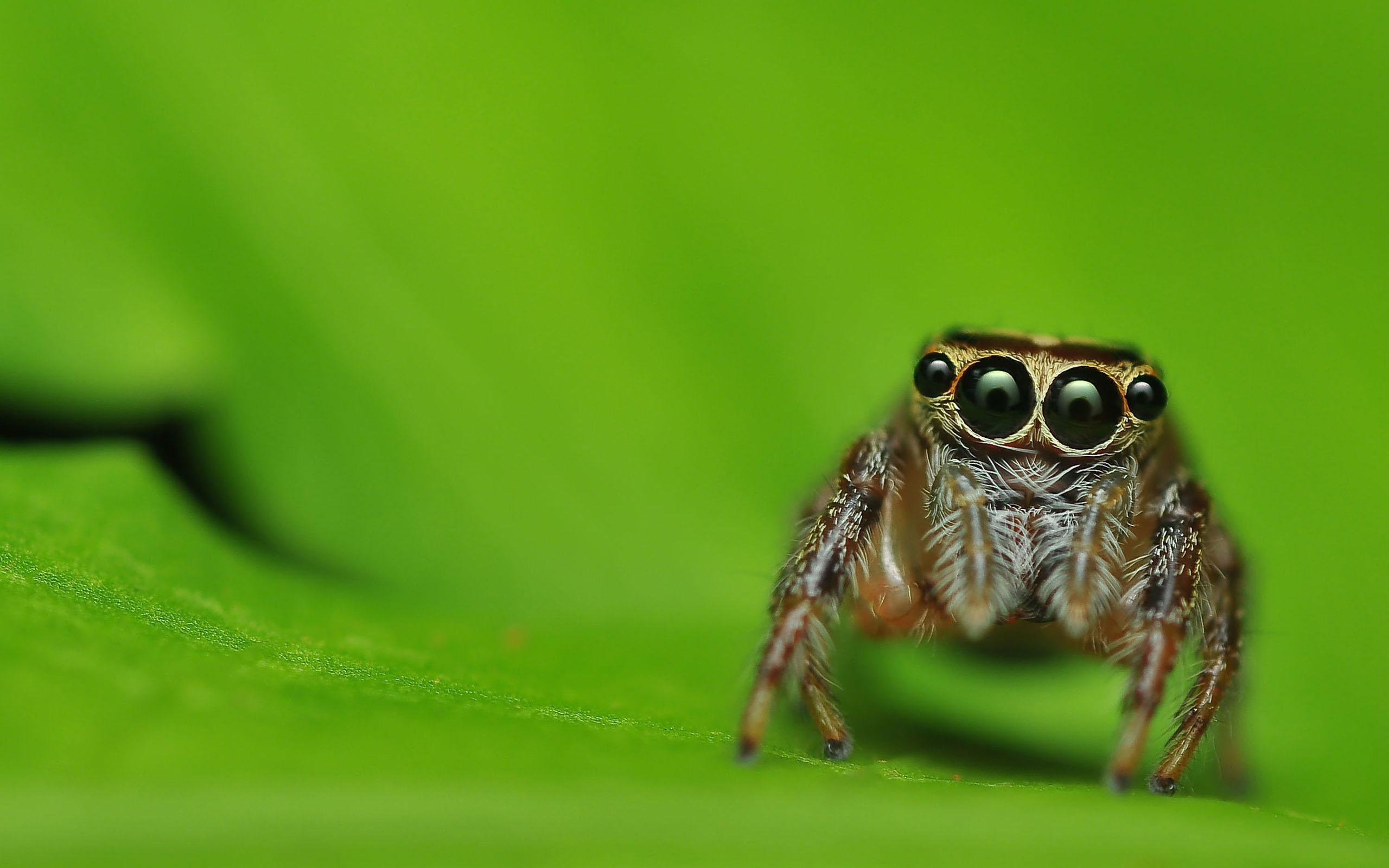 Multiple gaze of spider