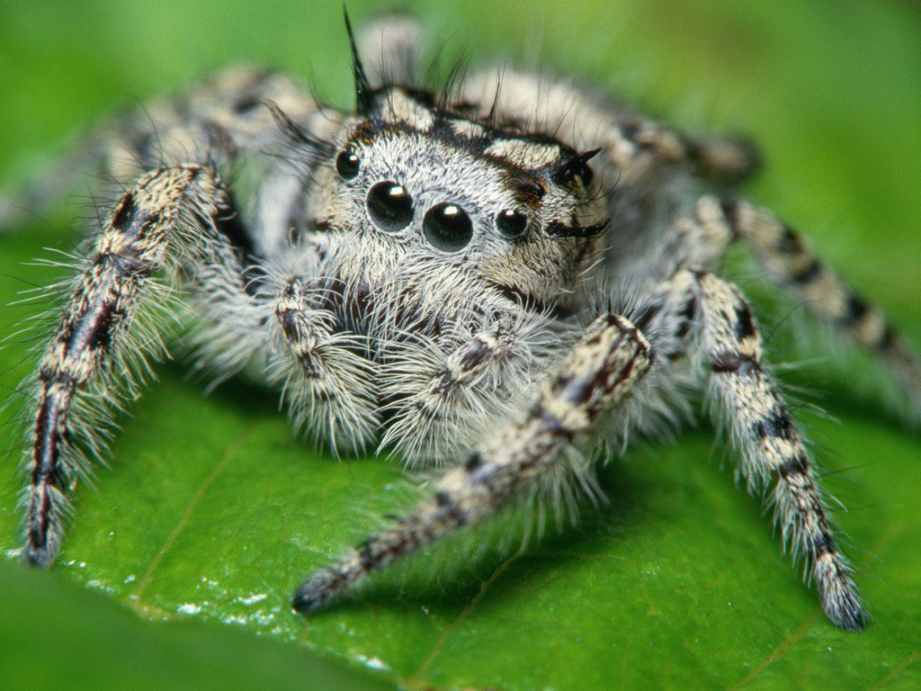 ... HD Collection Spider Wallpapers-1