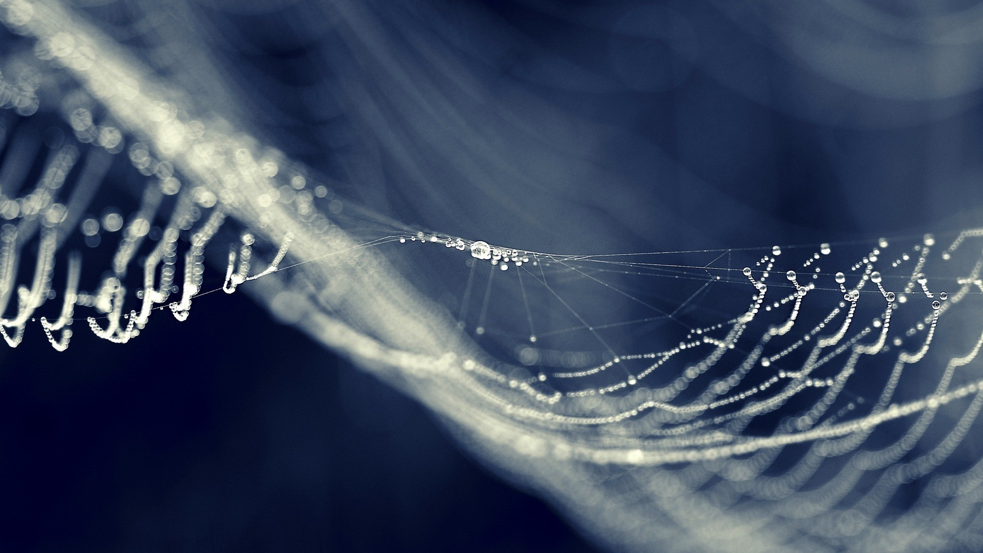 Blurred bokeh nature spider webs water drops 1920x1080