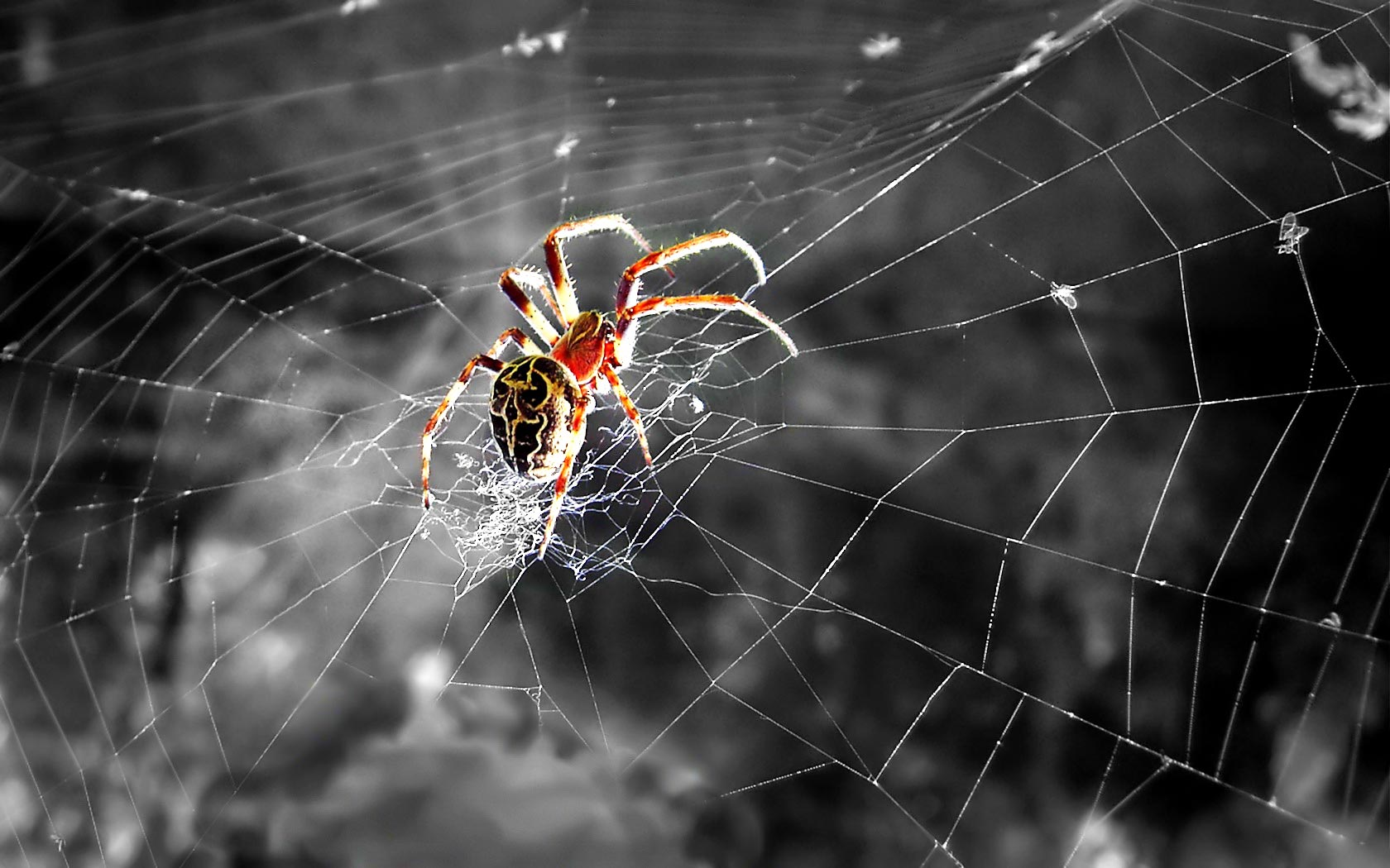 Spider Wallpaper