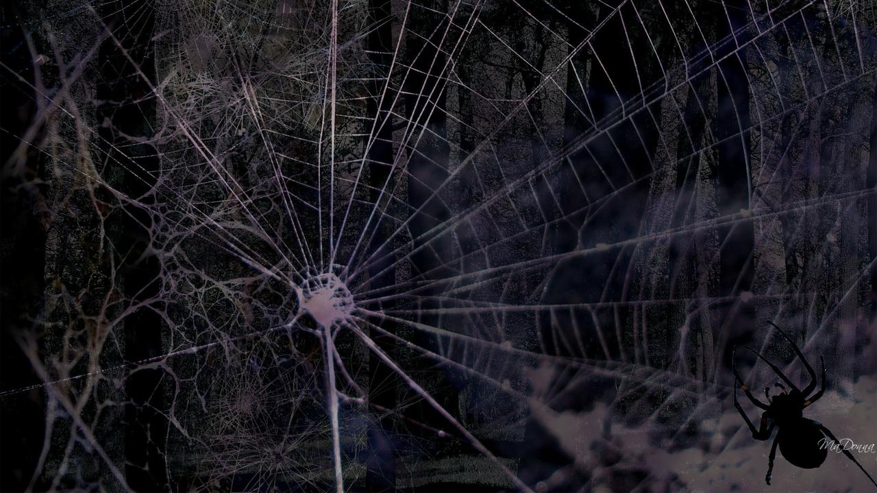Spider web bac.