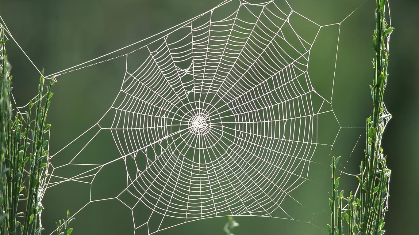 Spider Web HD