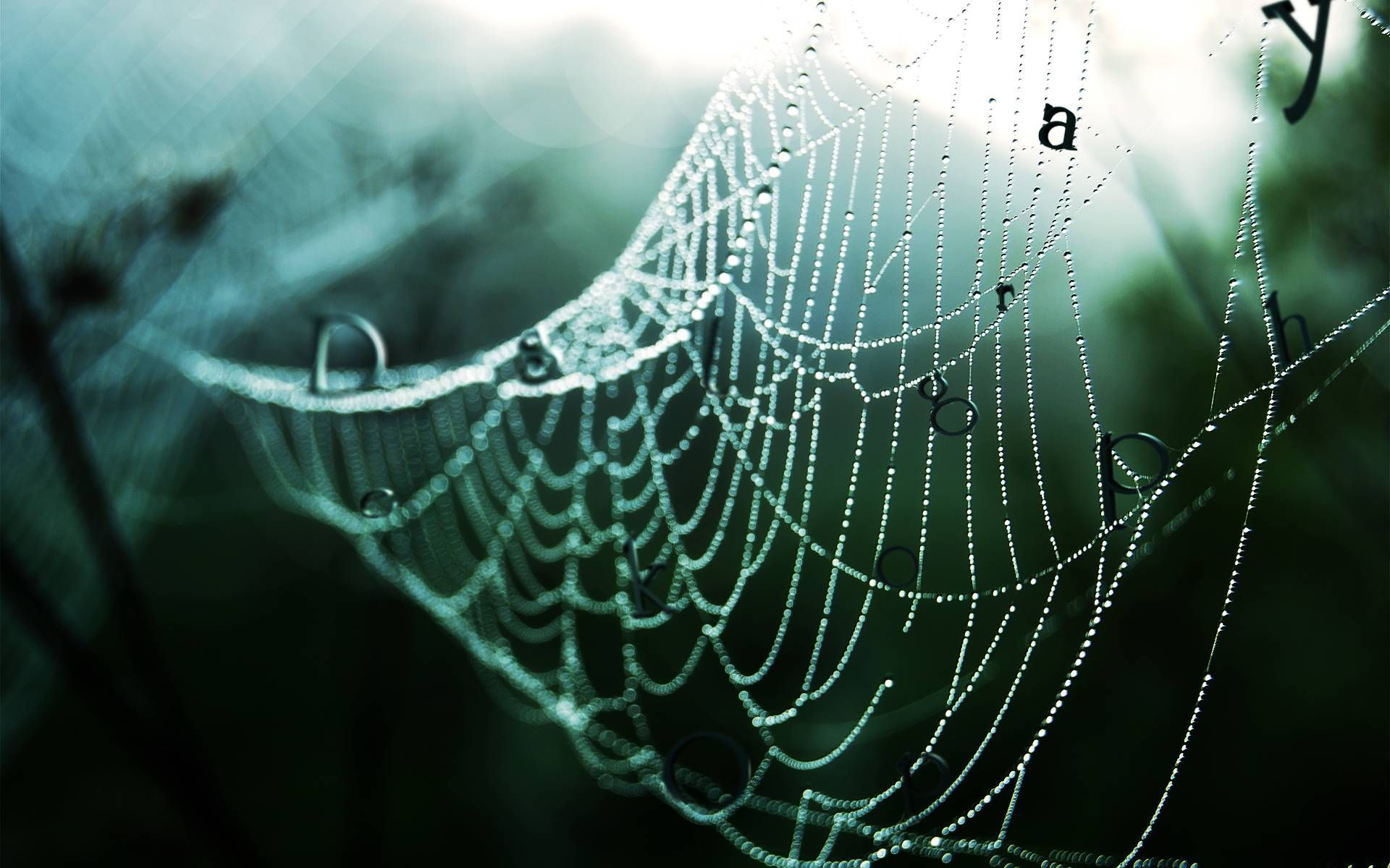 Wallpapers For > Spider Web Wallpaper 3d
