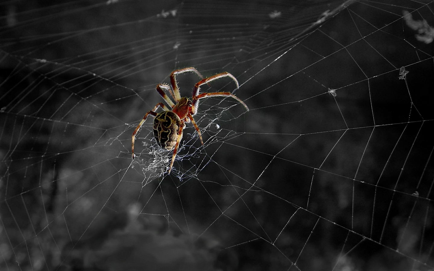 HD Spider Web Wallpaper · Spider Web · Spider Web ...