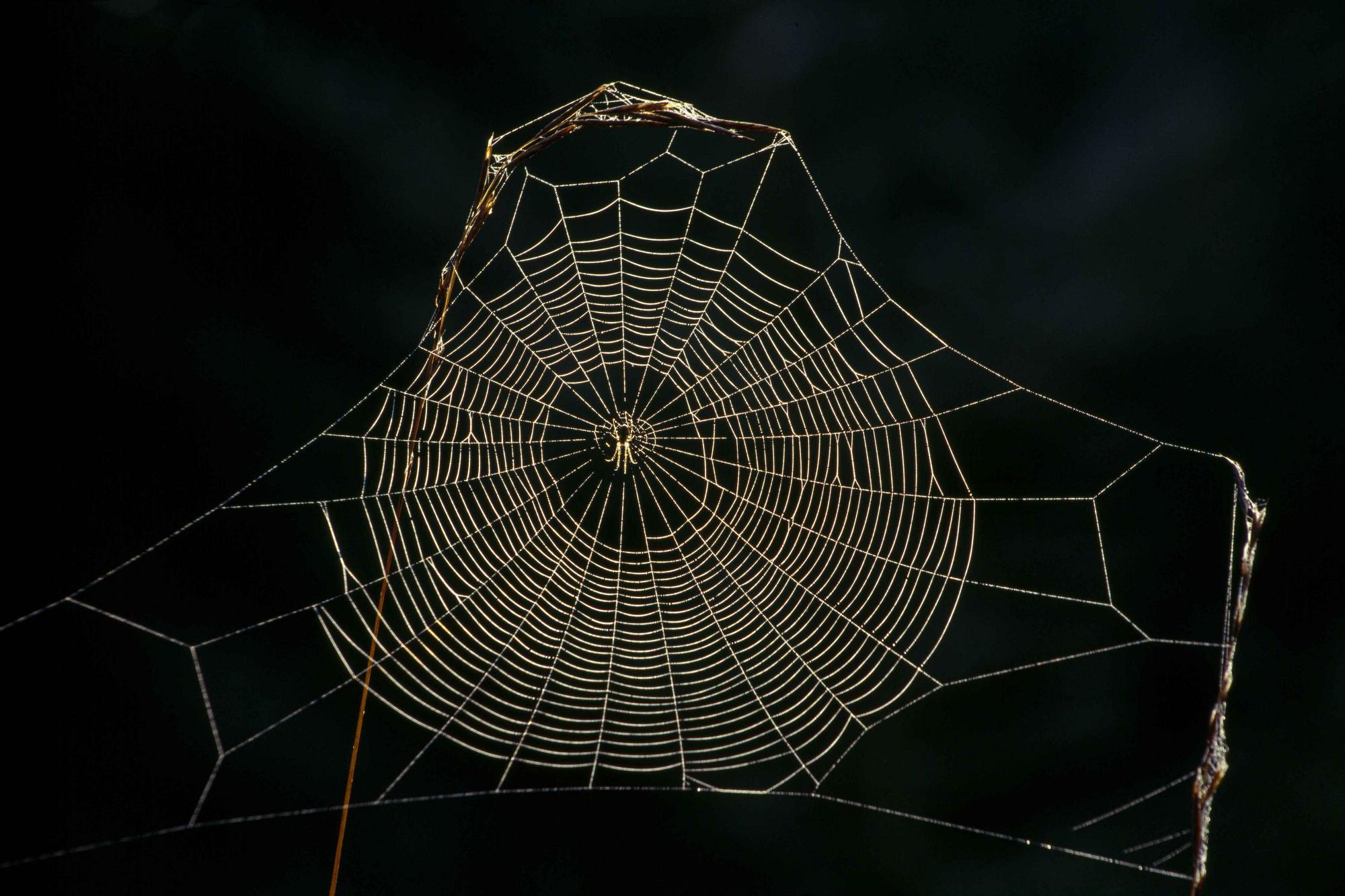 Delicate Spider Web Wallpaper