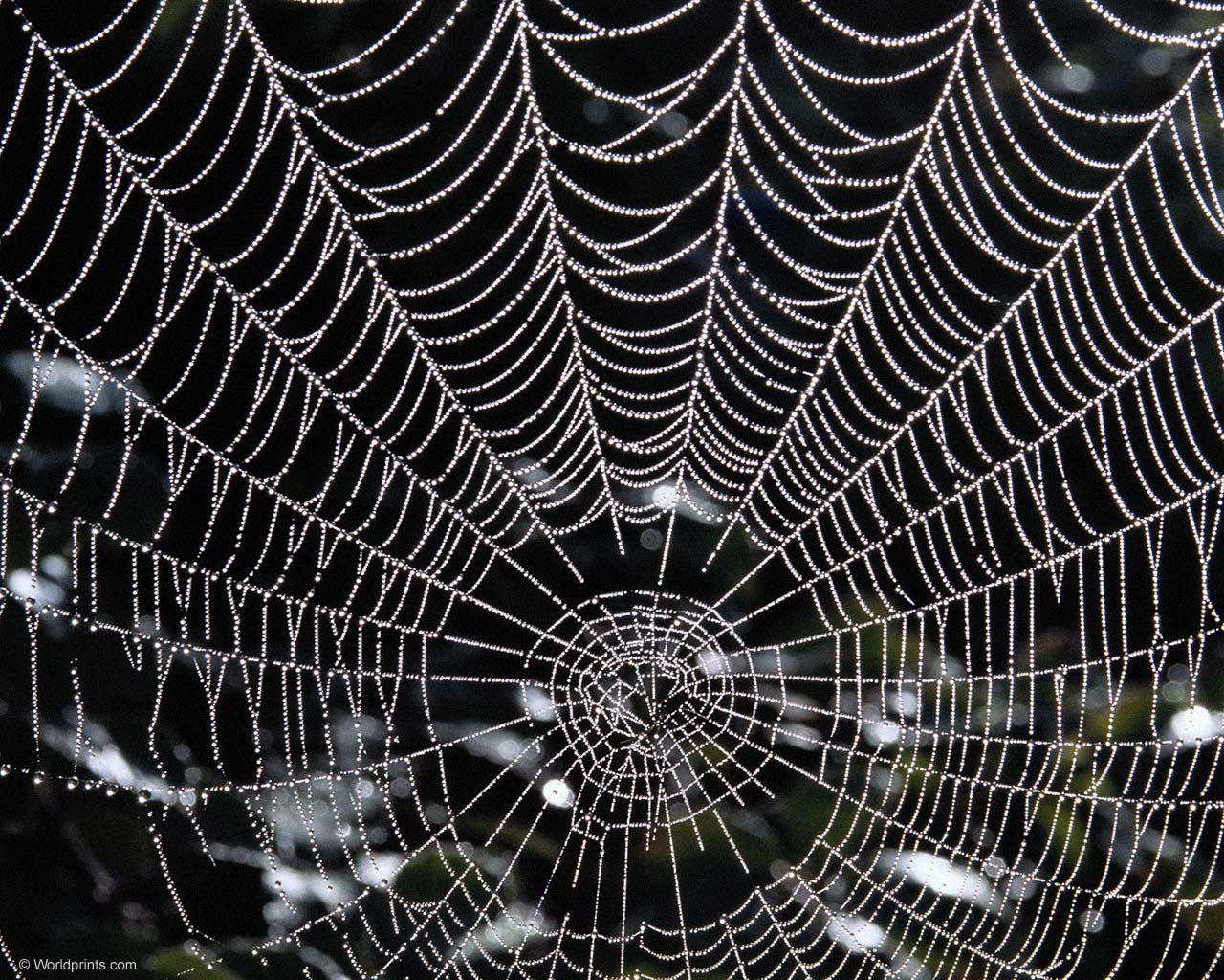Spider web - Best wallpapers on your desktop: Animal