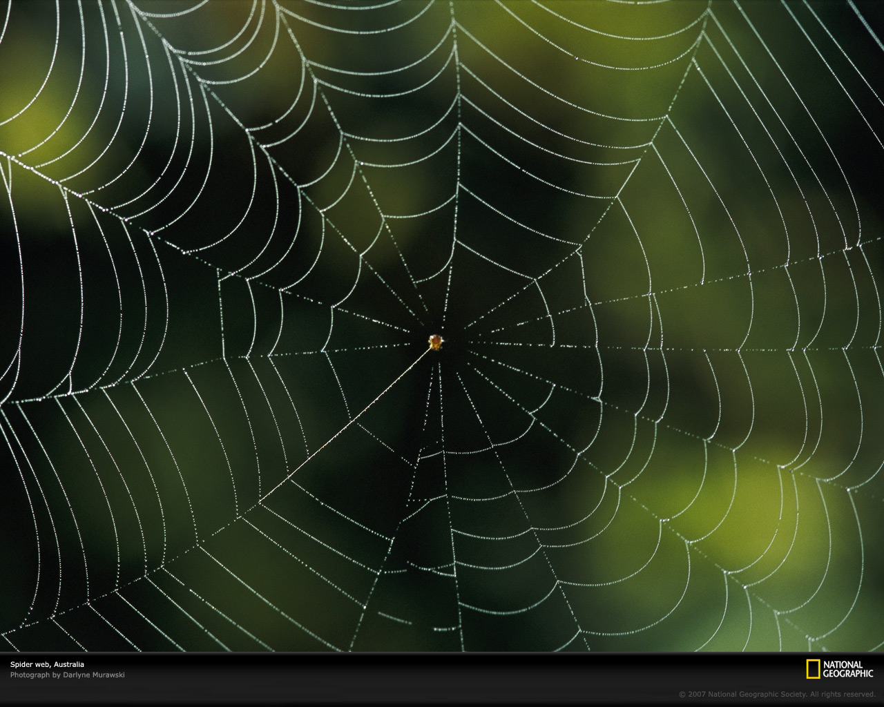 1280 x 1024 pixels—best for larger/widescreen monitors. A perfectly formed spider web ...