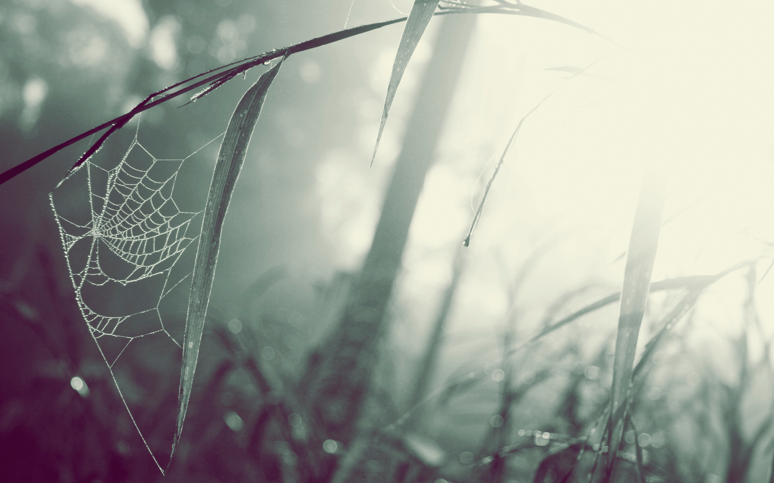 ... Spider Web Wallpaper ...