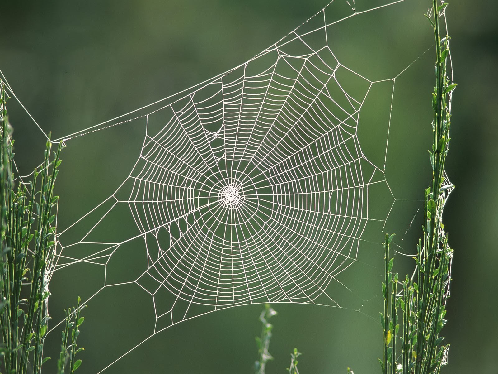 These wallpapers are high definition and available in wide range of sizes and resolutions. Download Spiders Web HD Wallpapers absolutely free for your Pc, ...