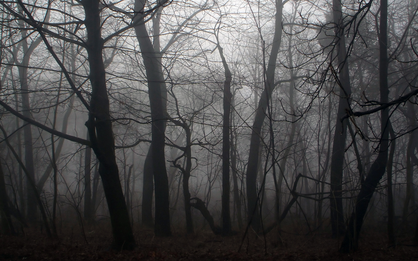 Spooky Forest Backgrounds 18574