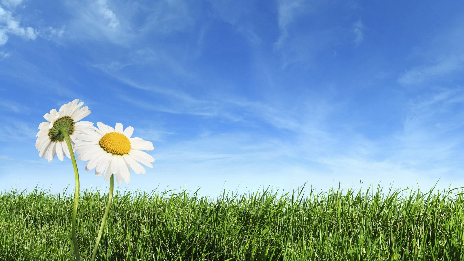 Spring Background Wallpaper: Staggering Spring Hd Wallpaper Background Desktop 1920x1080px