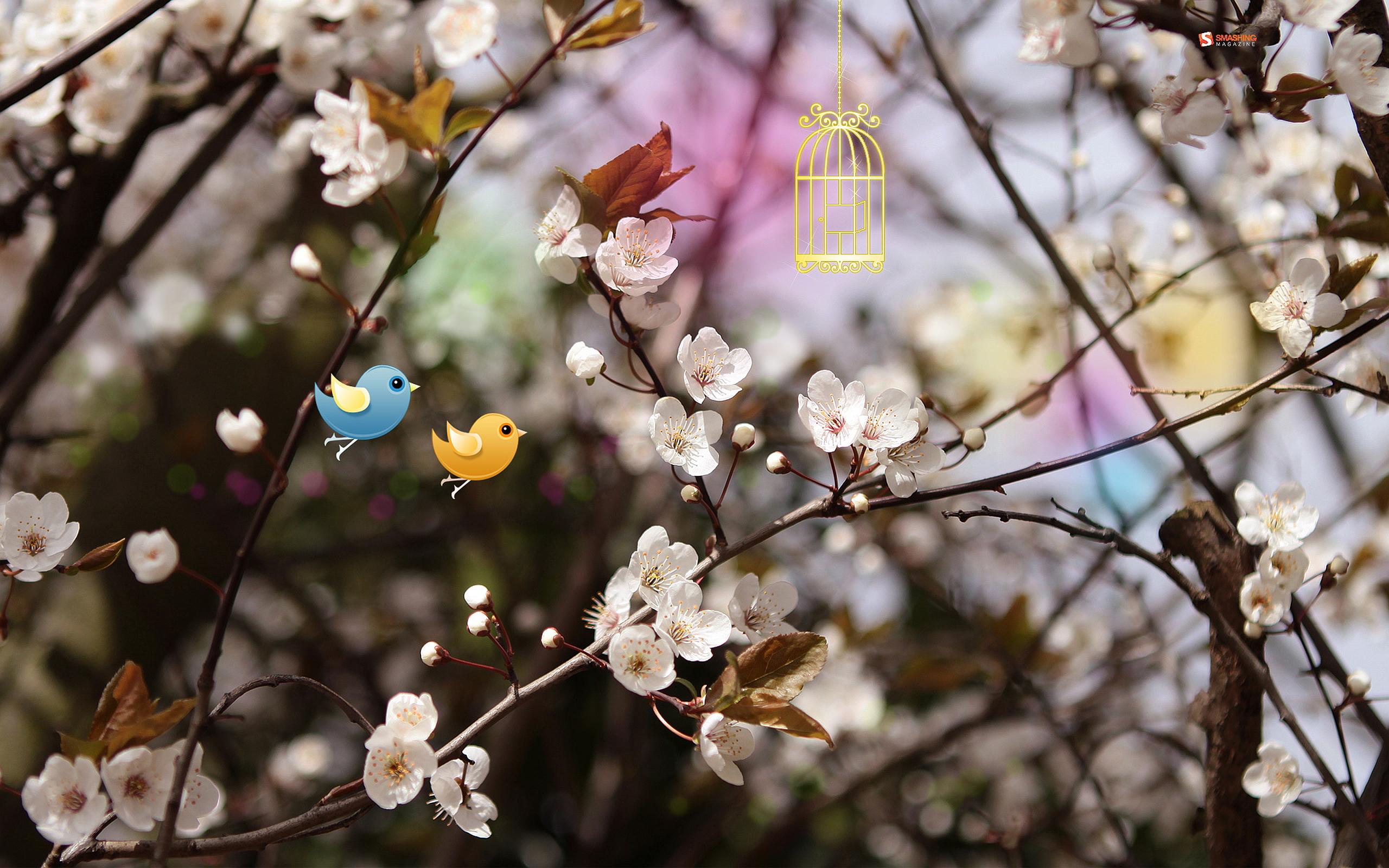 Spring birds blossoms