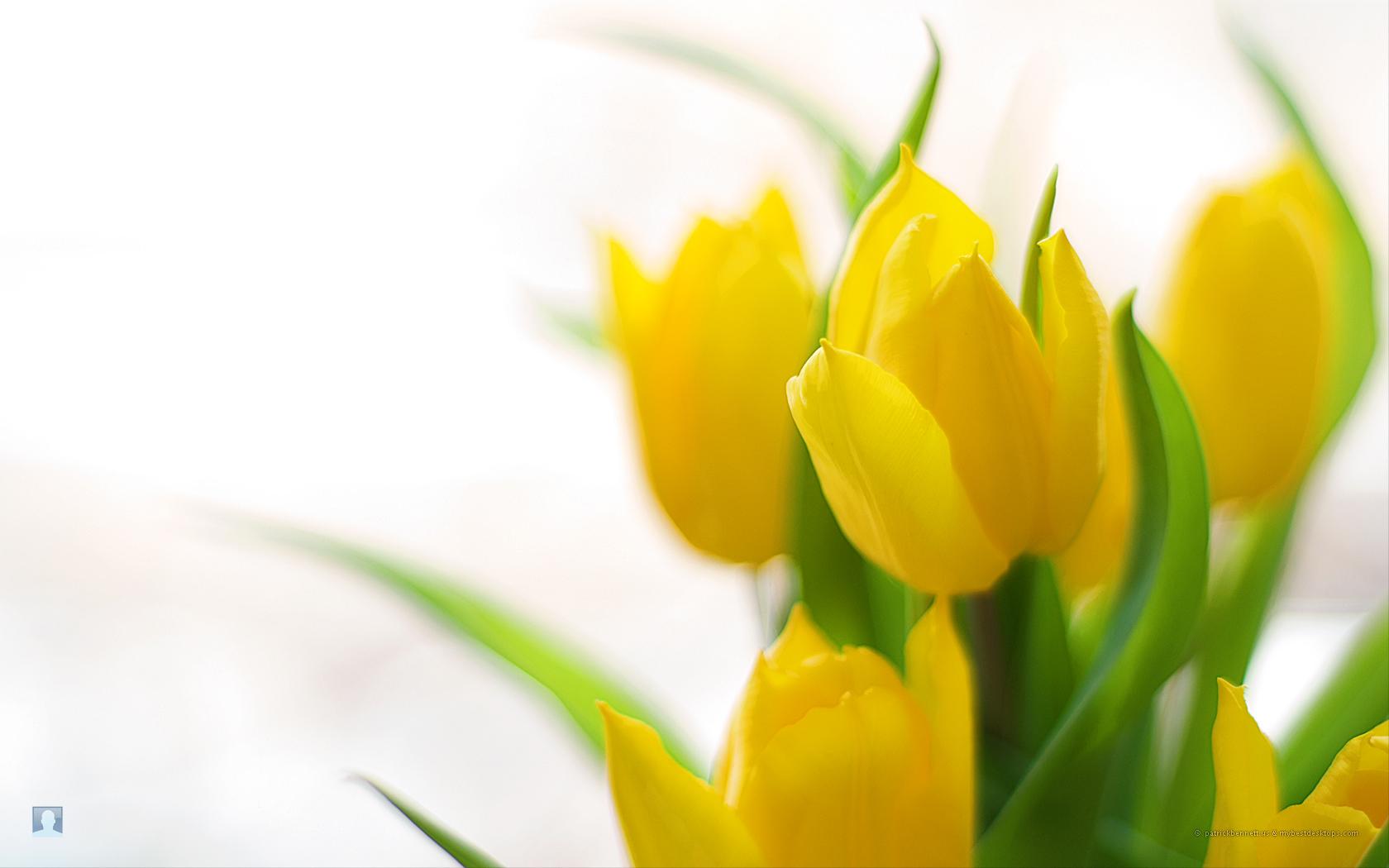 Spring Flowers Wallpaper (37)