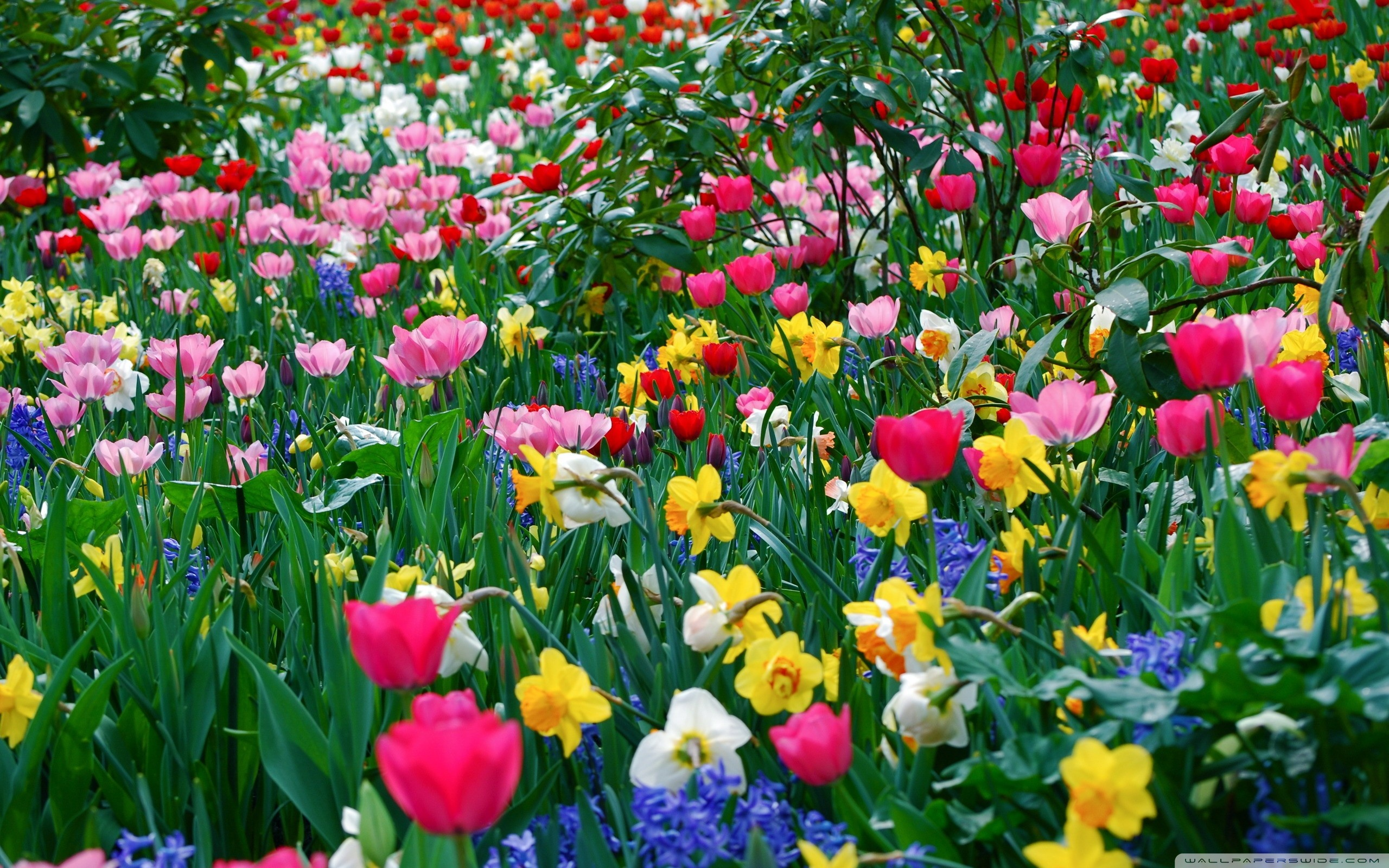 Spring Flowers Images