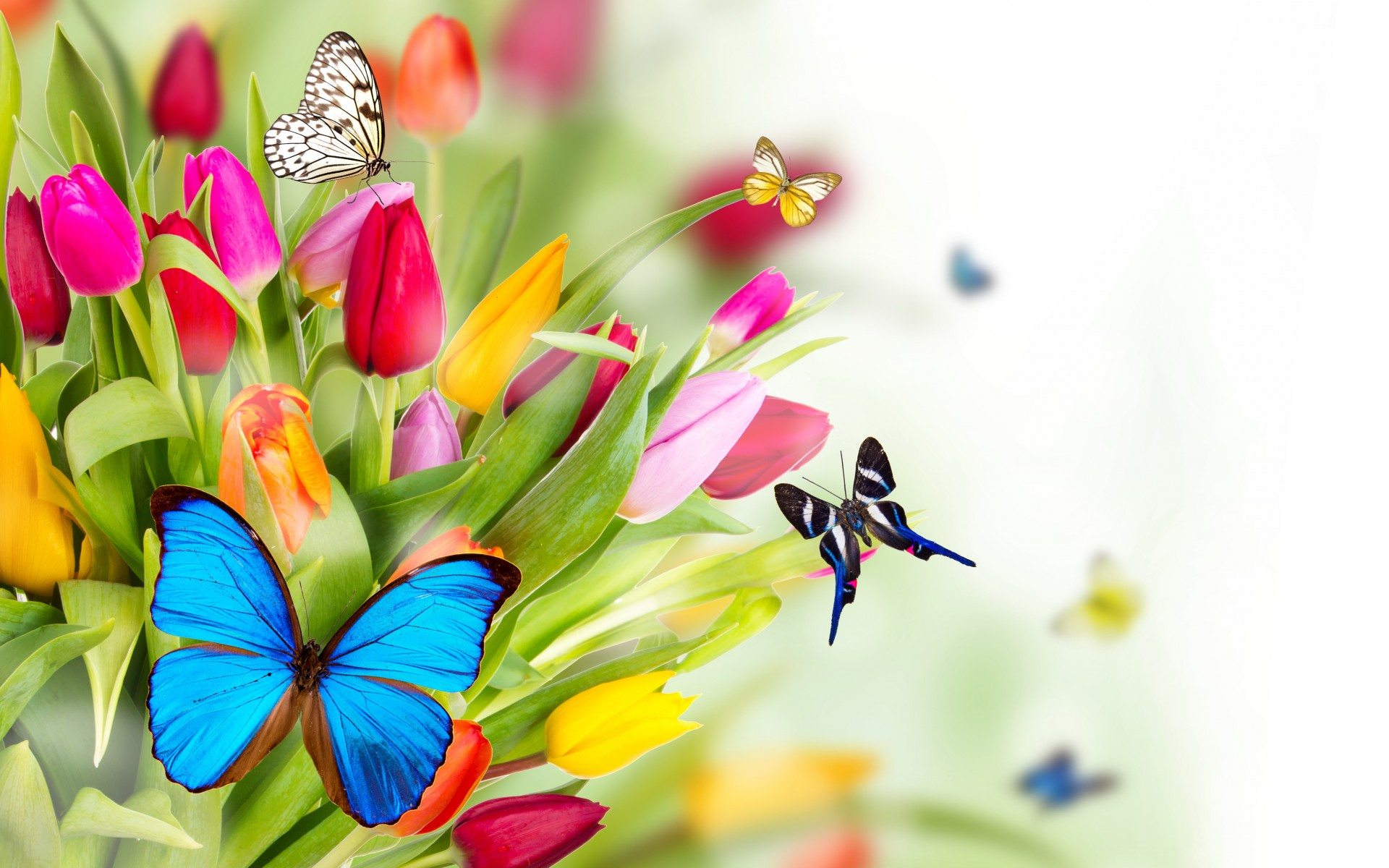 Spring Flowers Images Wallpaper 1920x1200 66688