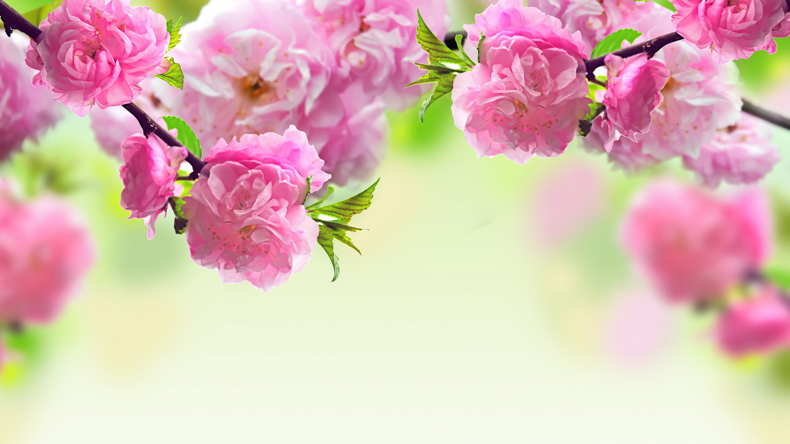 Spring Flowers Wallpaper (21)