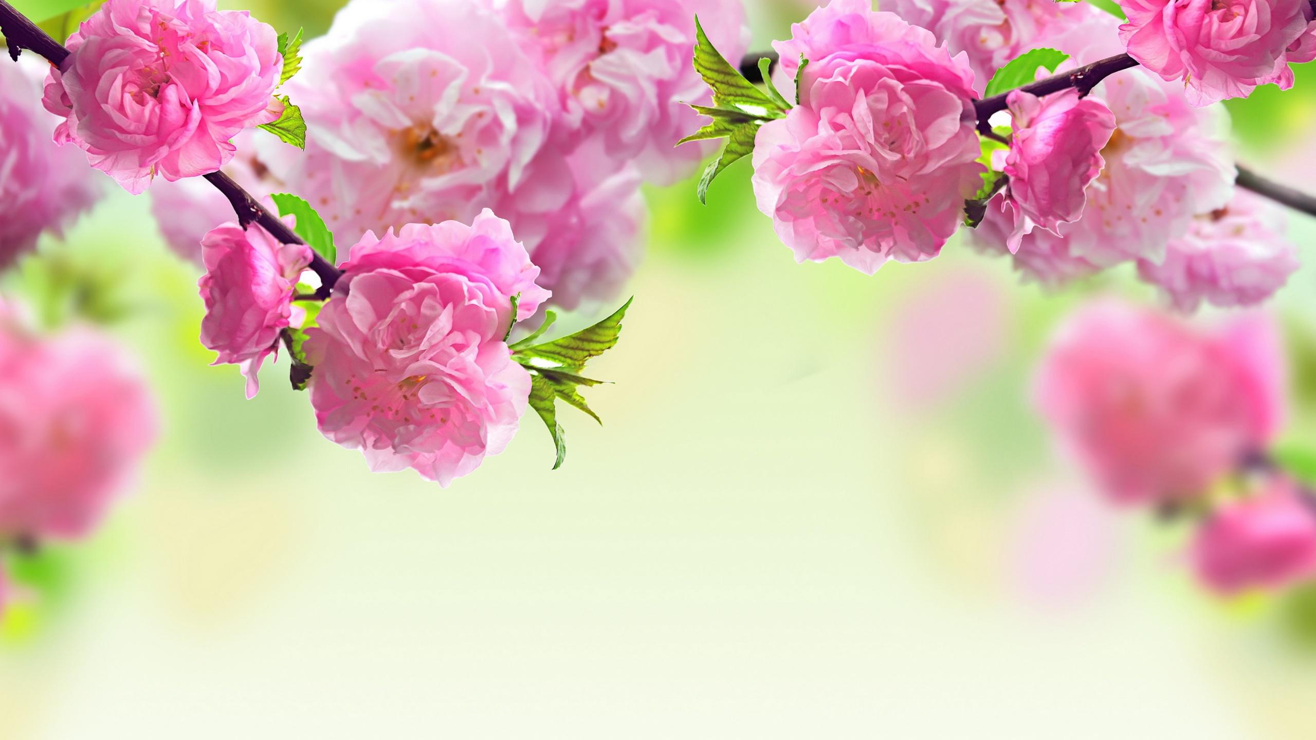 Spring Flowers Wallpaper (21)
