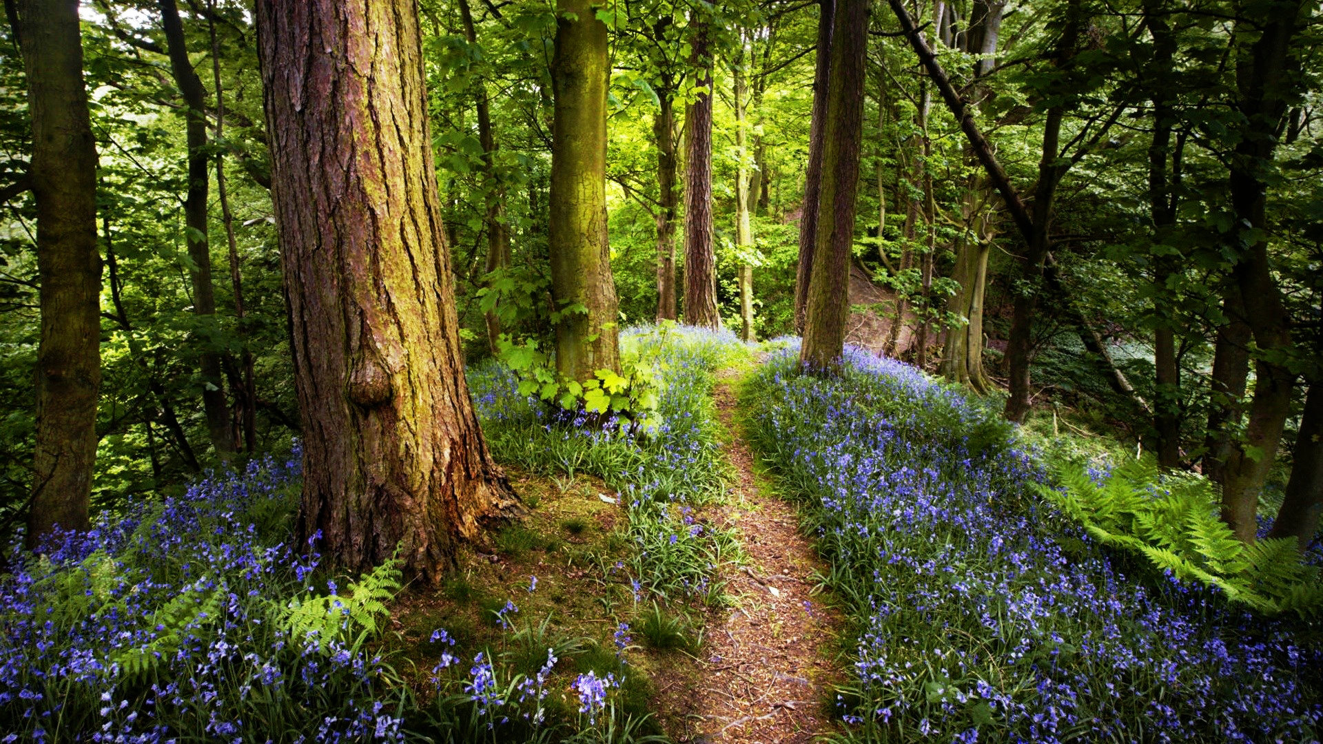 Pretty Spring Forest Wallpaper 13453