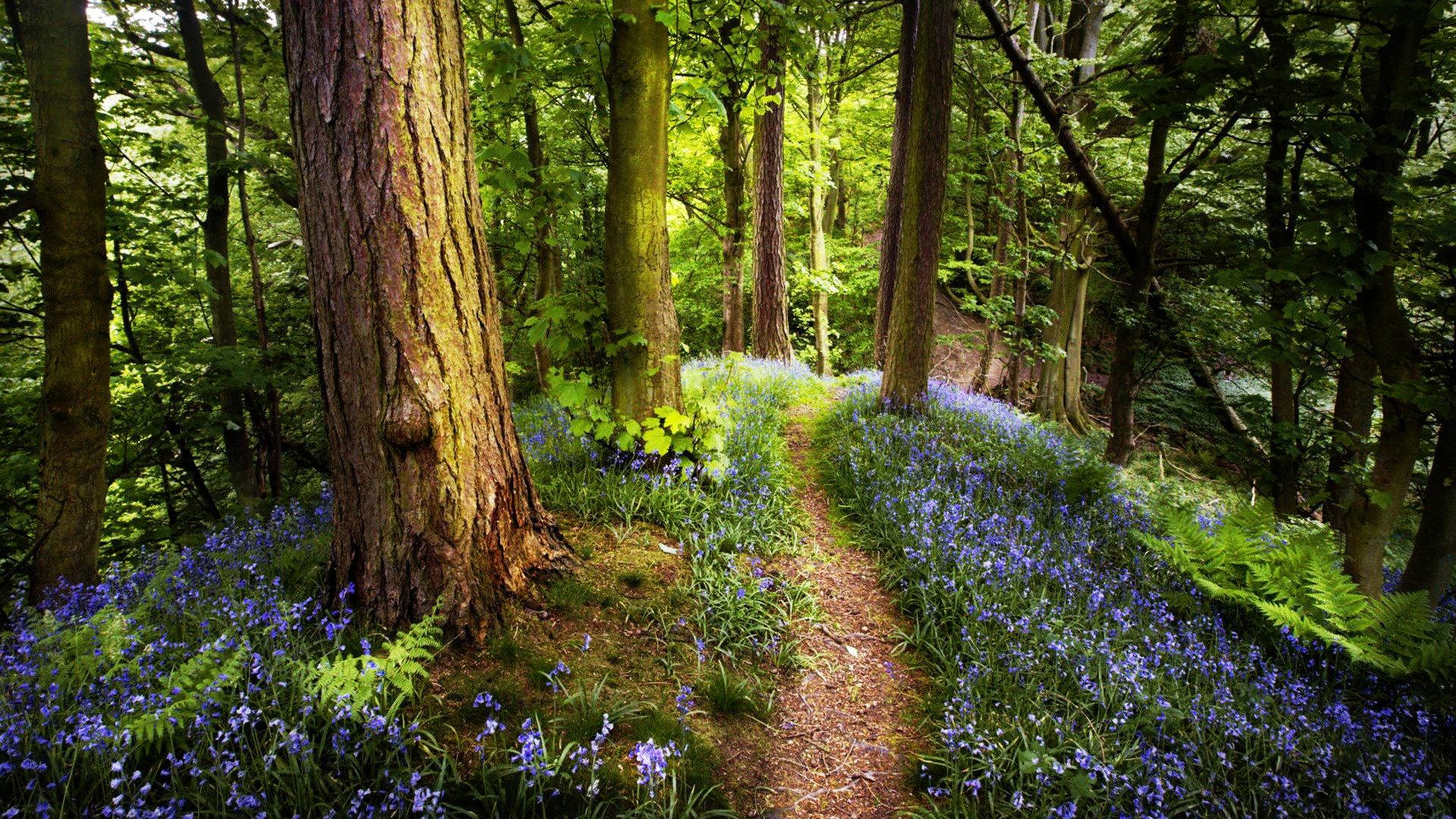 Spring Forest Backgrounds