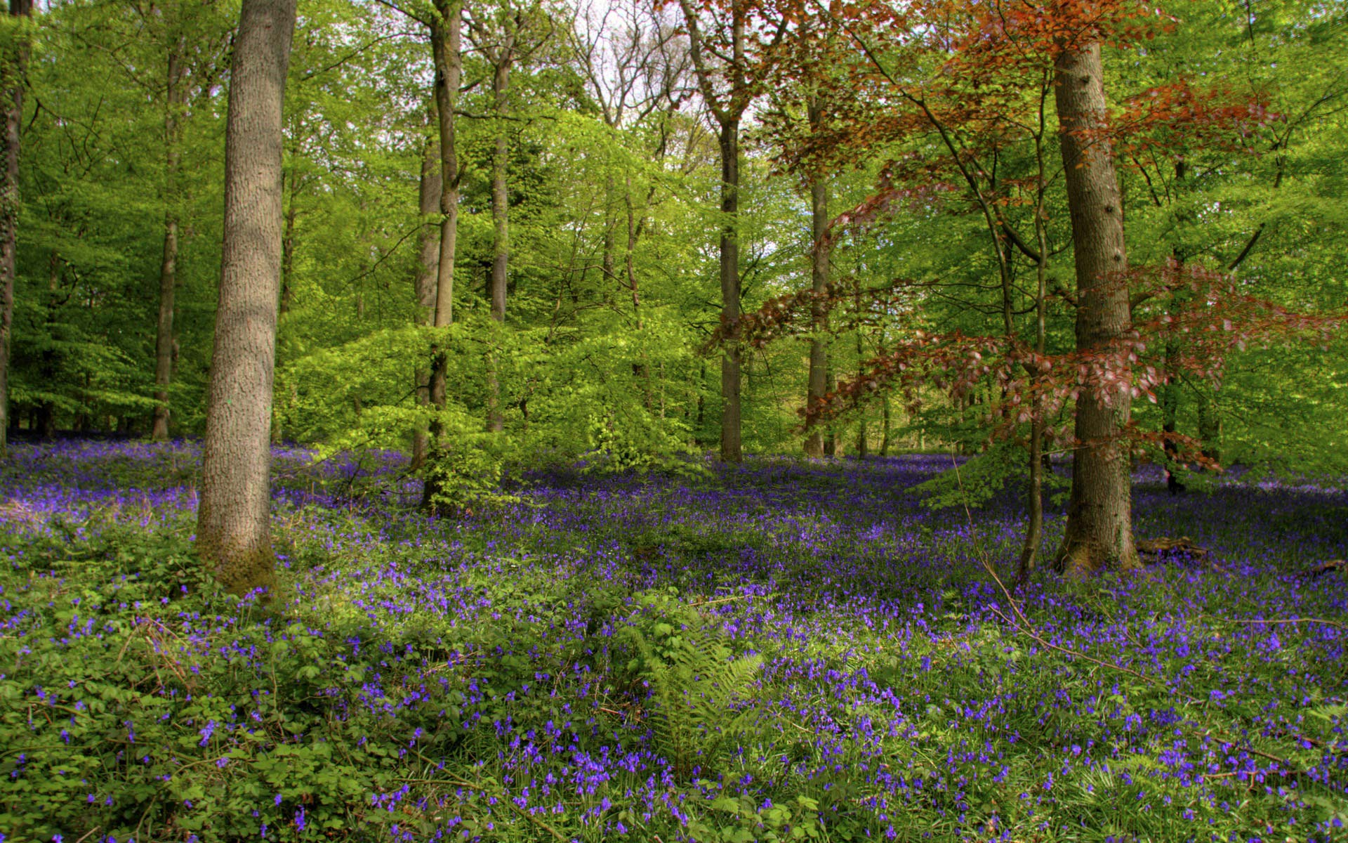 Free Spring Forest Wallpaper 13437