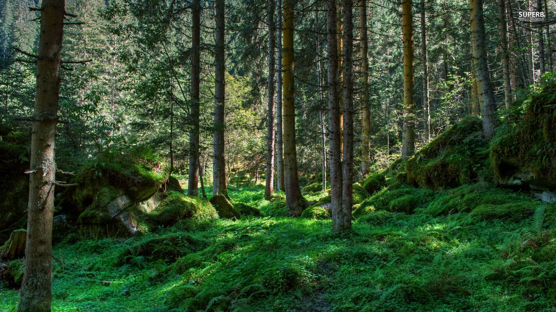 Spring forest wallpaper 1920x1080