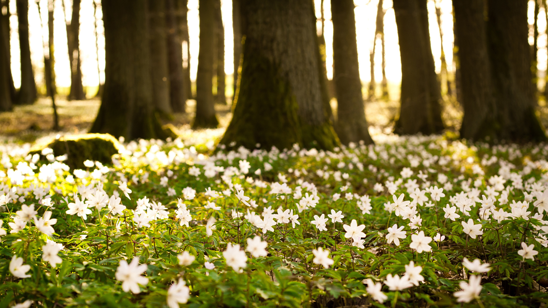 View Spring Forest Desktop Wallpaper ...