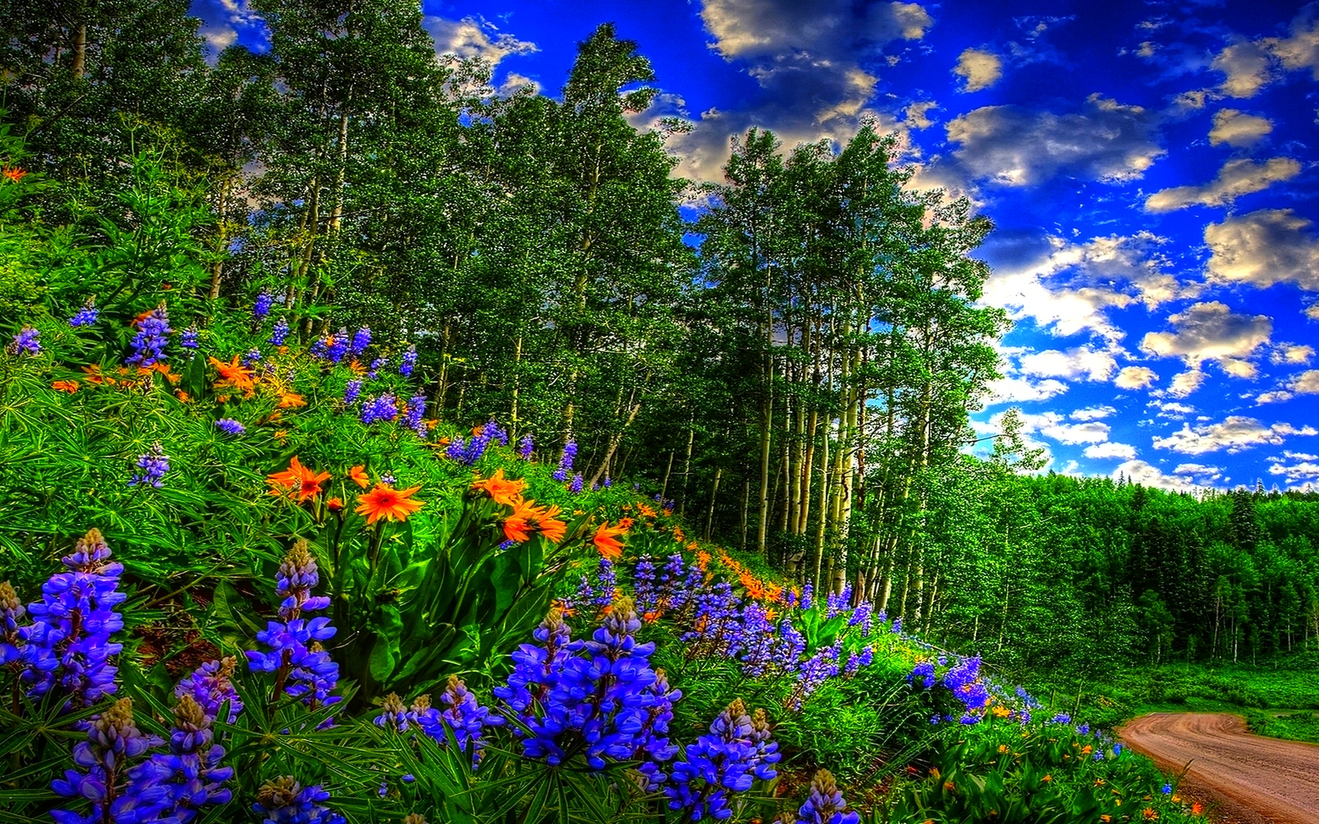 Spring Forest Wallpaper
