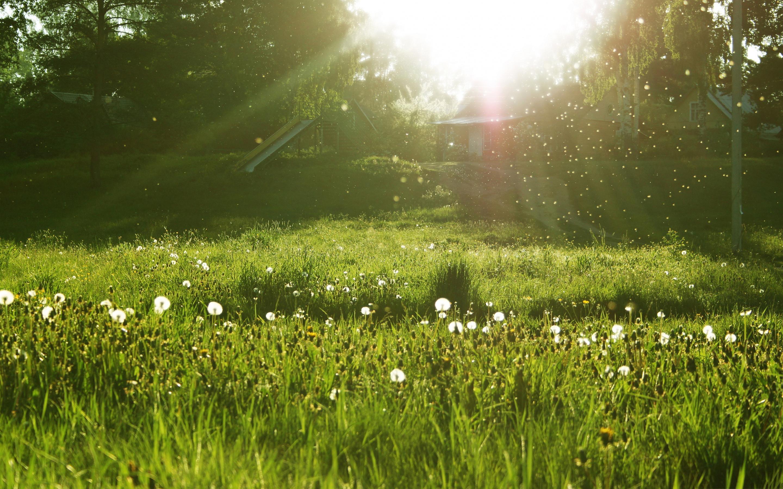 Lovely Spring Meadow Wallpaper