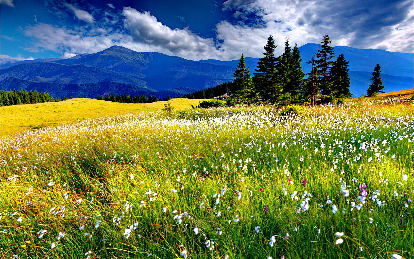 Spring meadow wallpaper 1680x1050 68911 for The meado