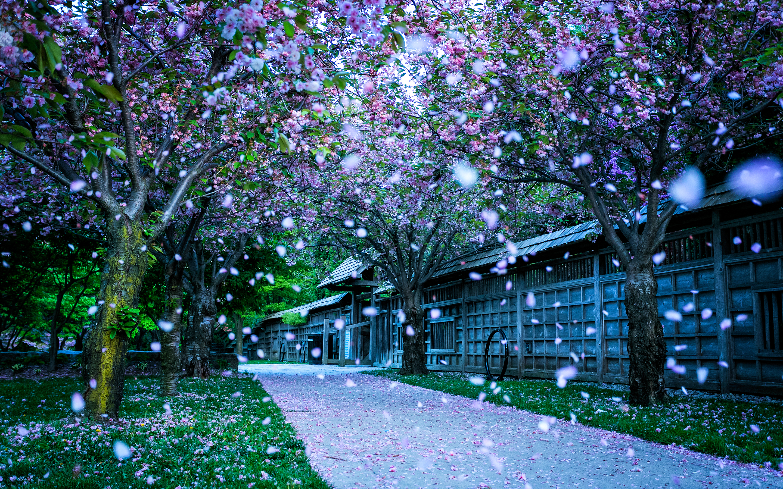 Spring park blooms