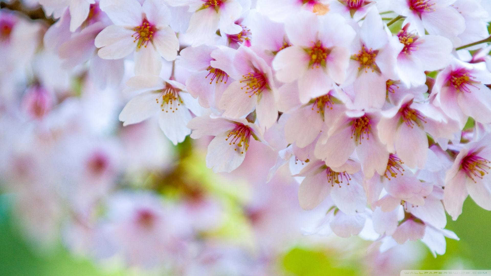 Spring Photos HD