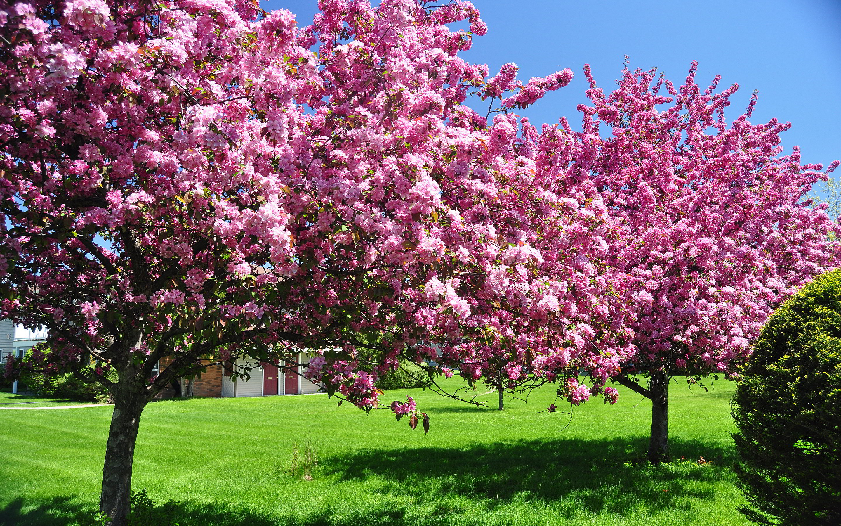 Spring blooming trees