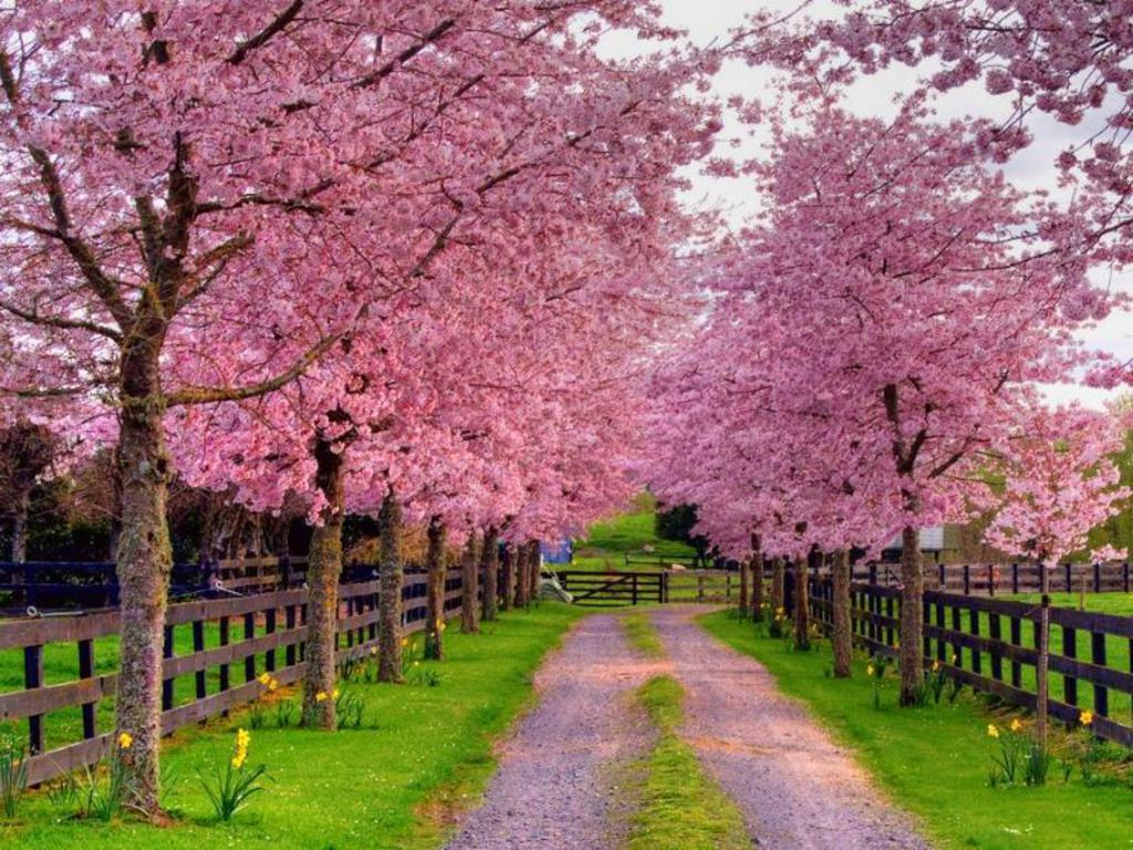 Hdwallpaperhd Wallpaper Spring Screensavers