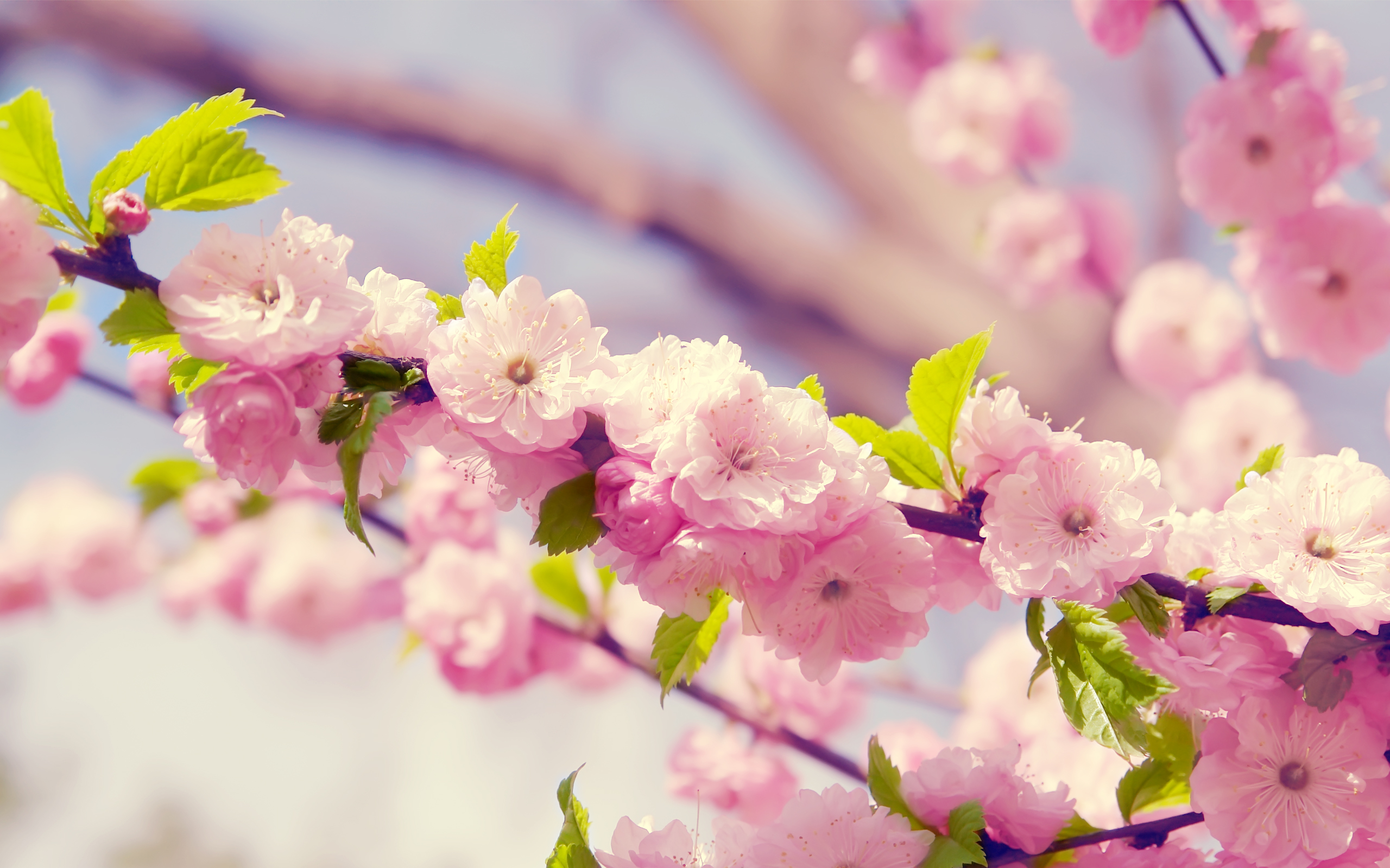 springtime desktop wallpaper