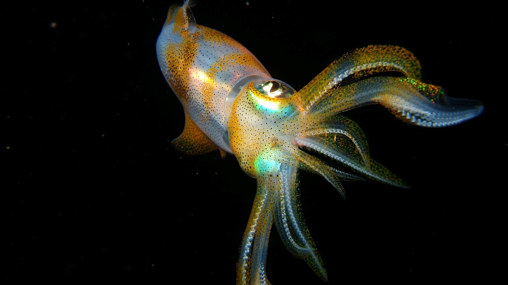 Squid Wallpaper