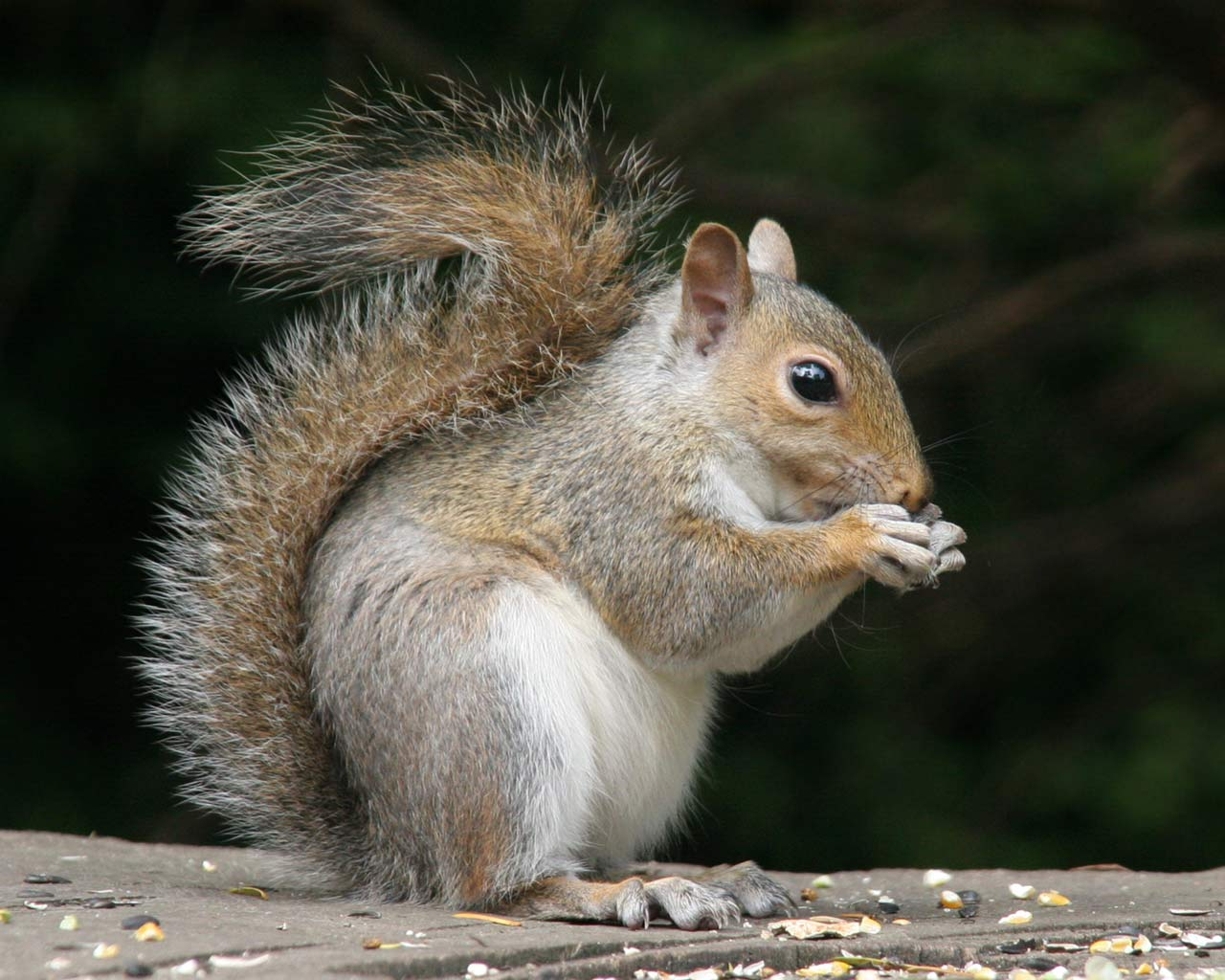 click to enlarge squirrel.jpg