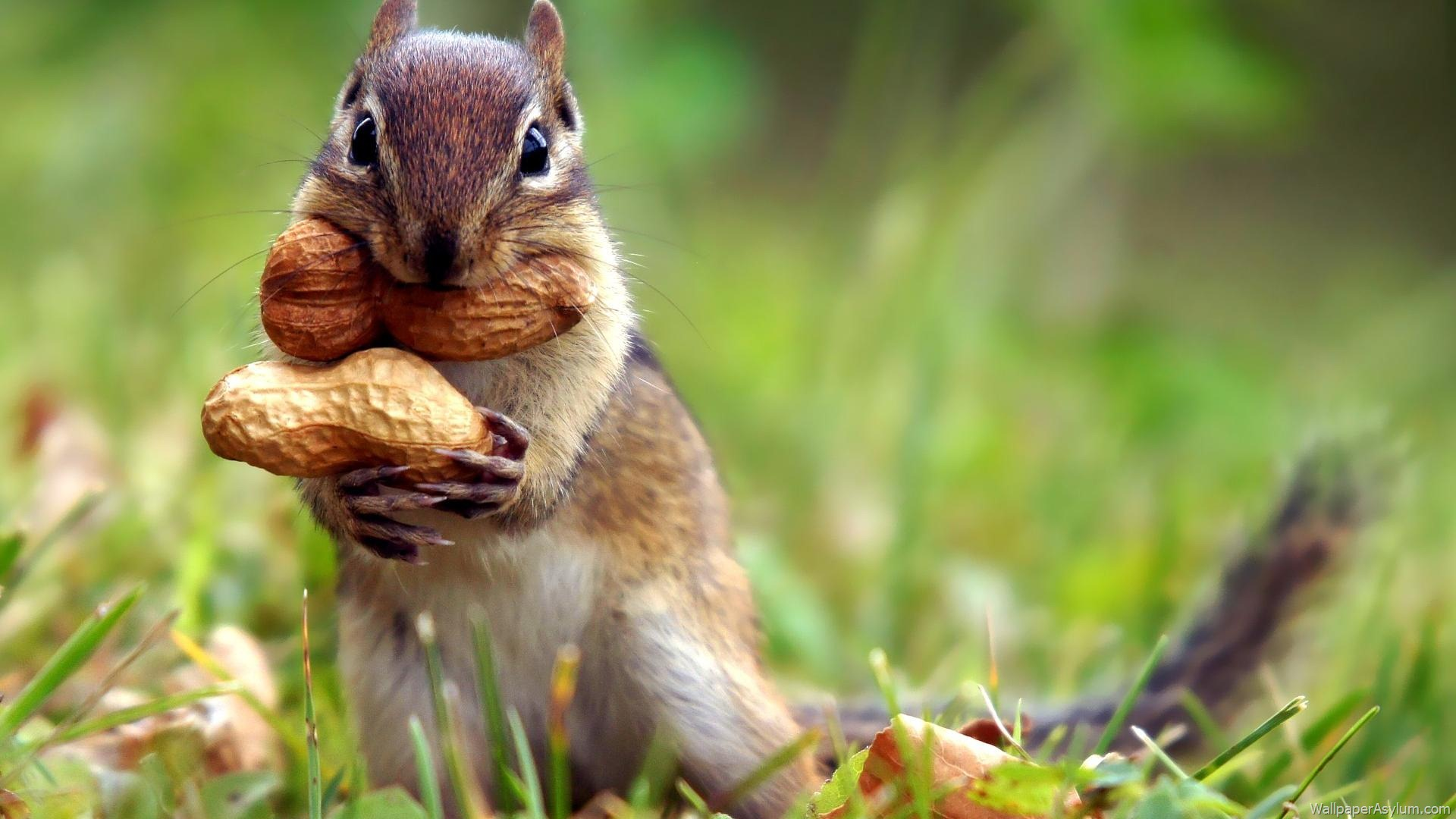 Adorable Squirrel Widescreen Wallpapers