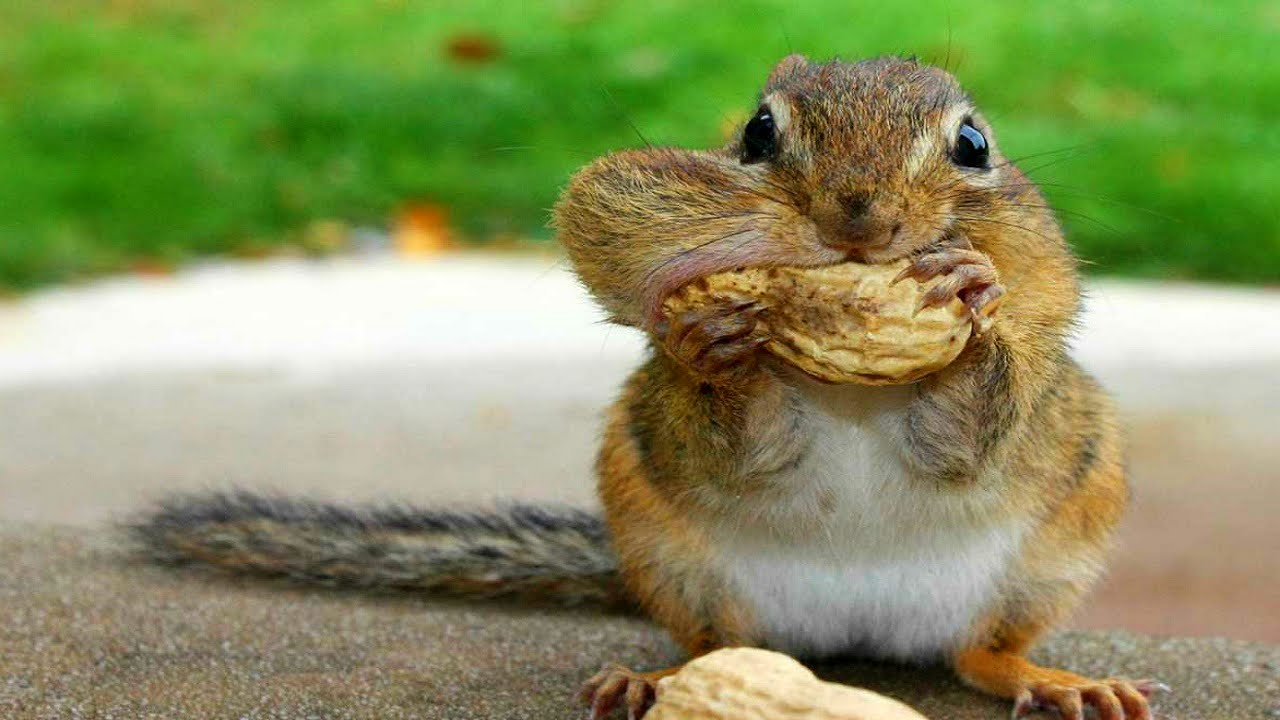 10 Funniest Squirrel Videos