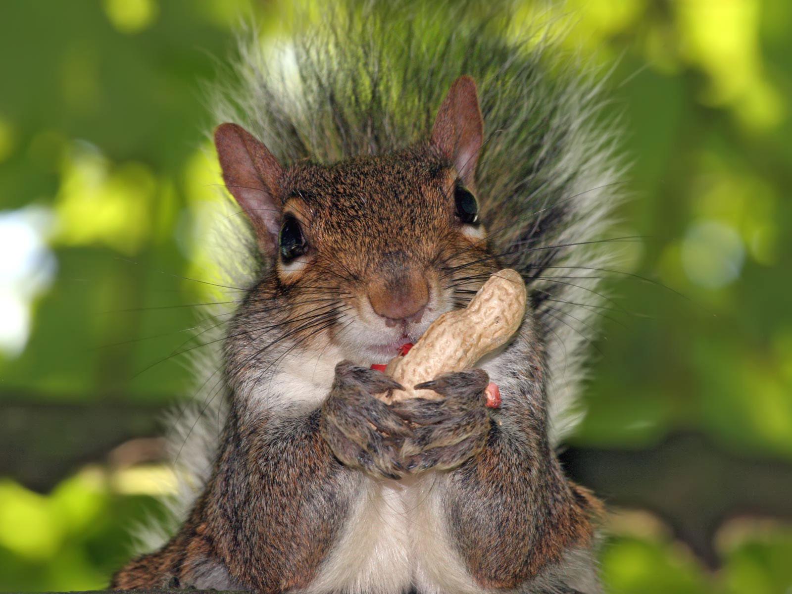 """Pest Files: Sandy the Squirrel – Part 1″"