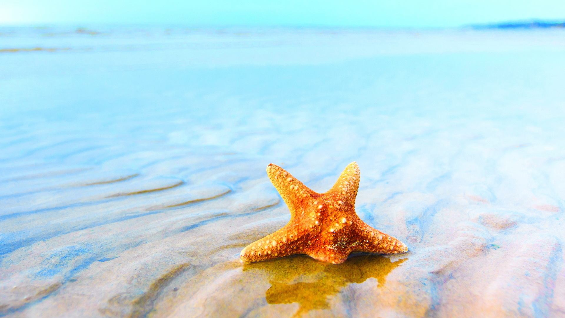 Starfish Background