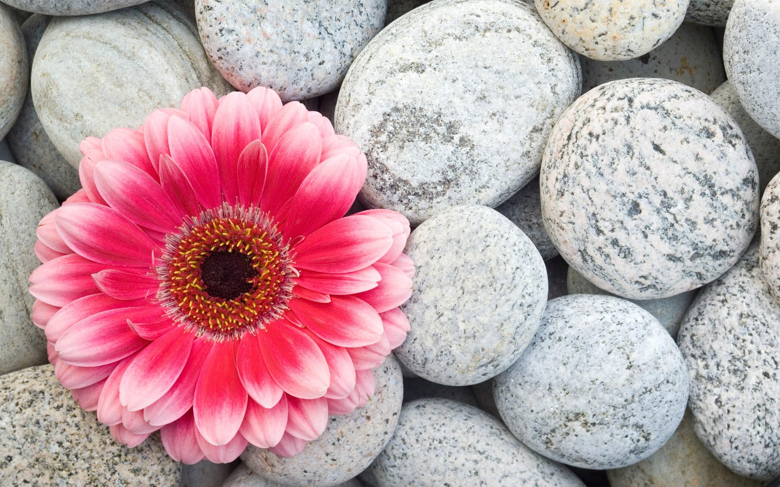 Stones Gerbera Flower