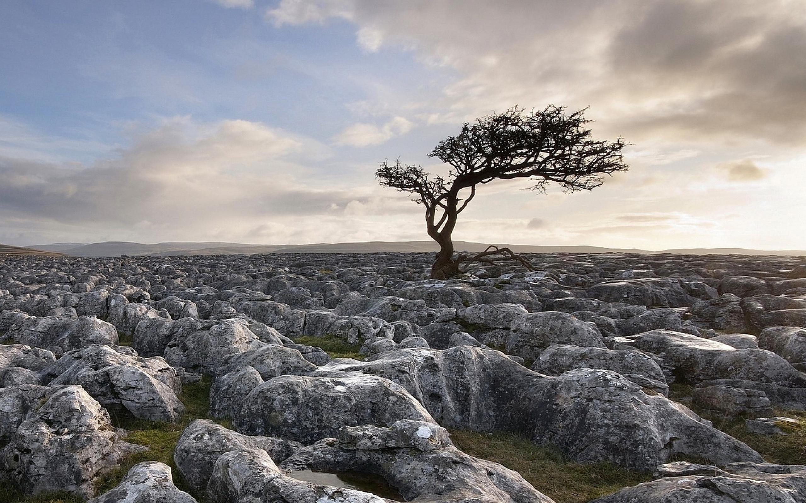 Stony Landscape Tree