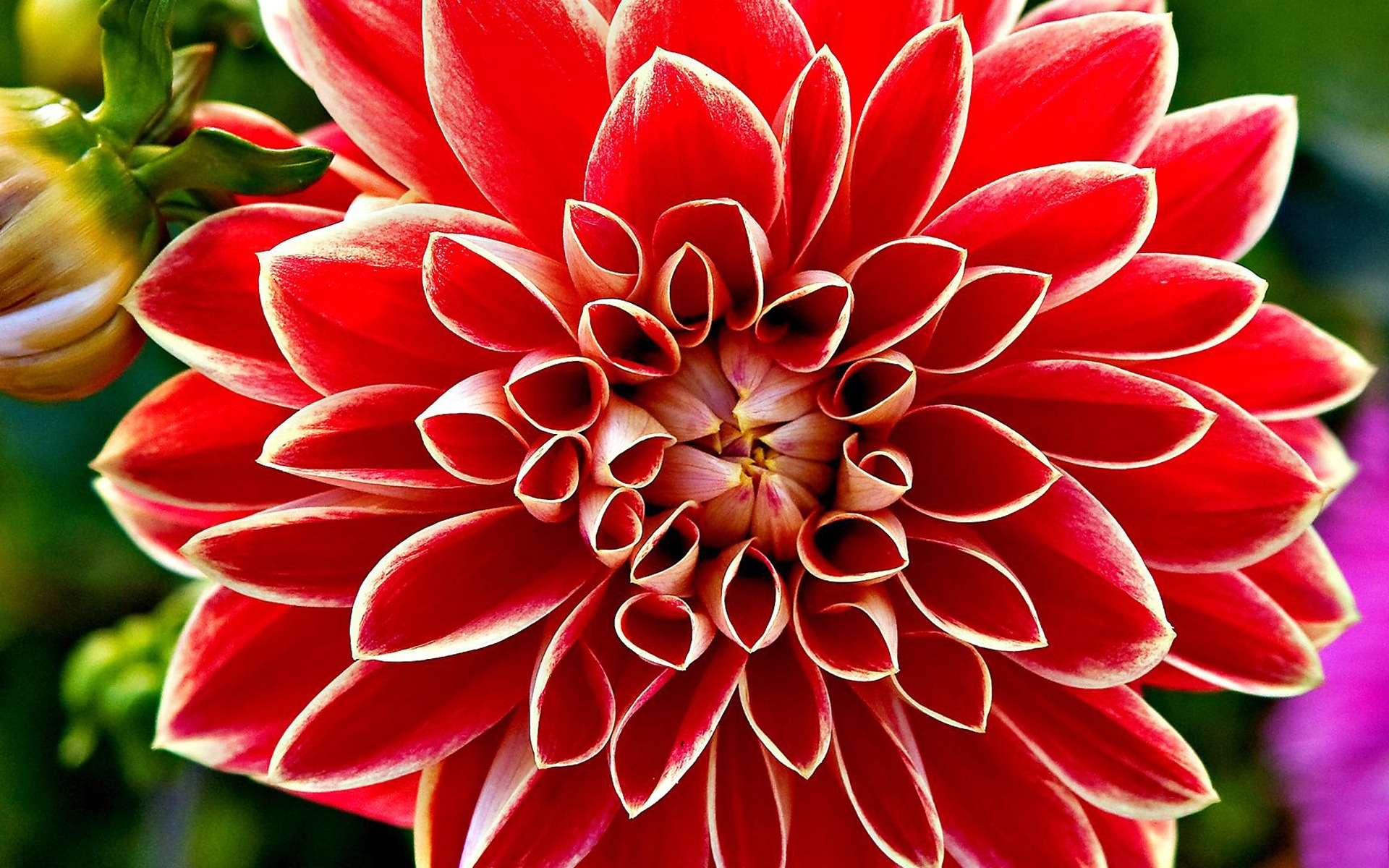 Strange beautiful red flower wallpaper