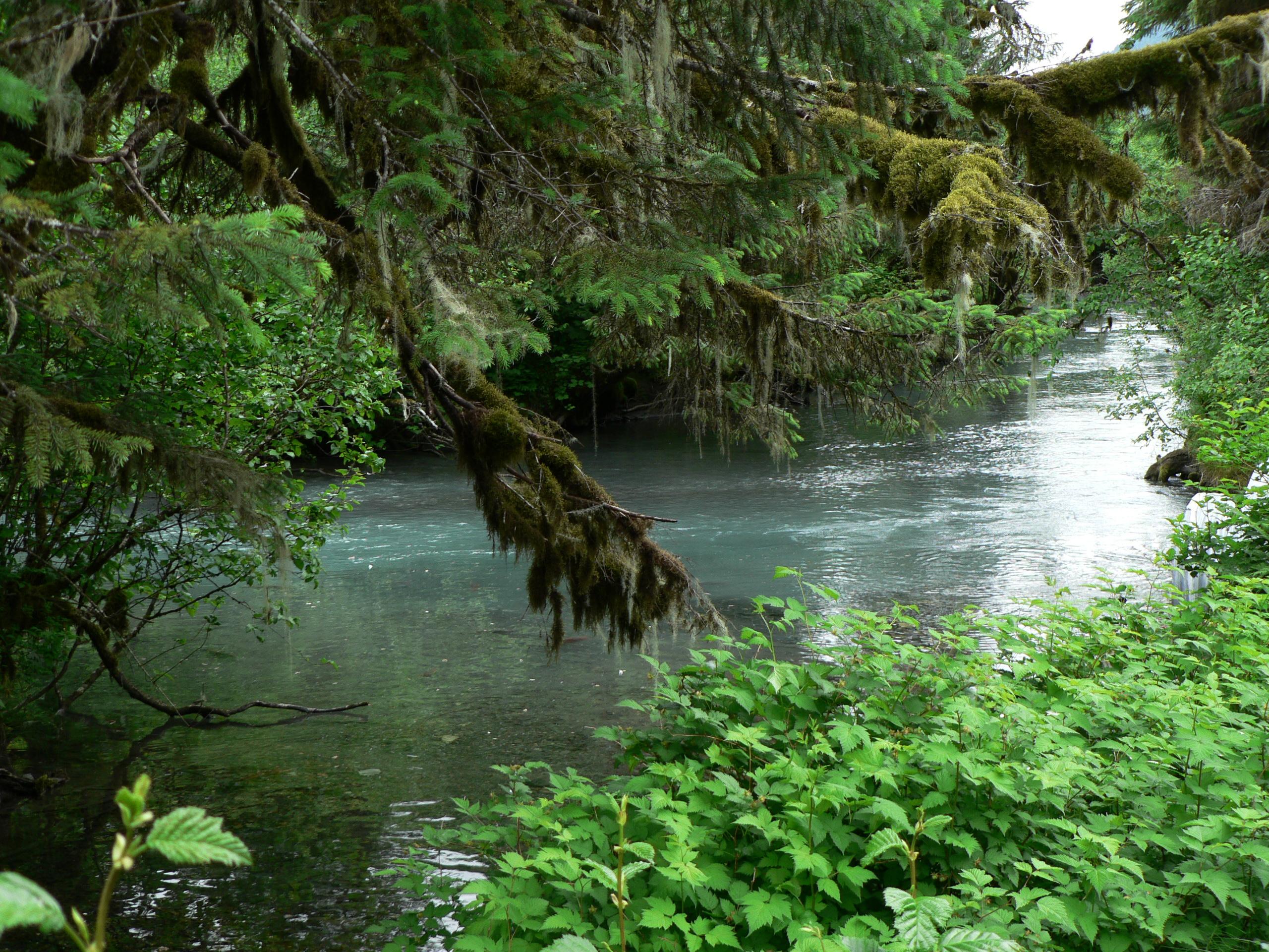 File:Cordova Power Creek Salmon Stream.jpg