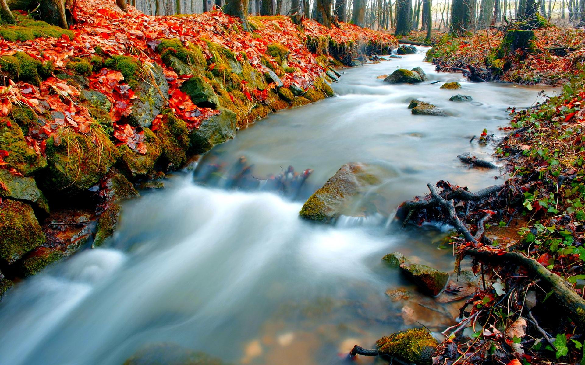 Fantastic Forest Stream Wallpaper