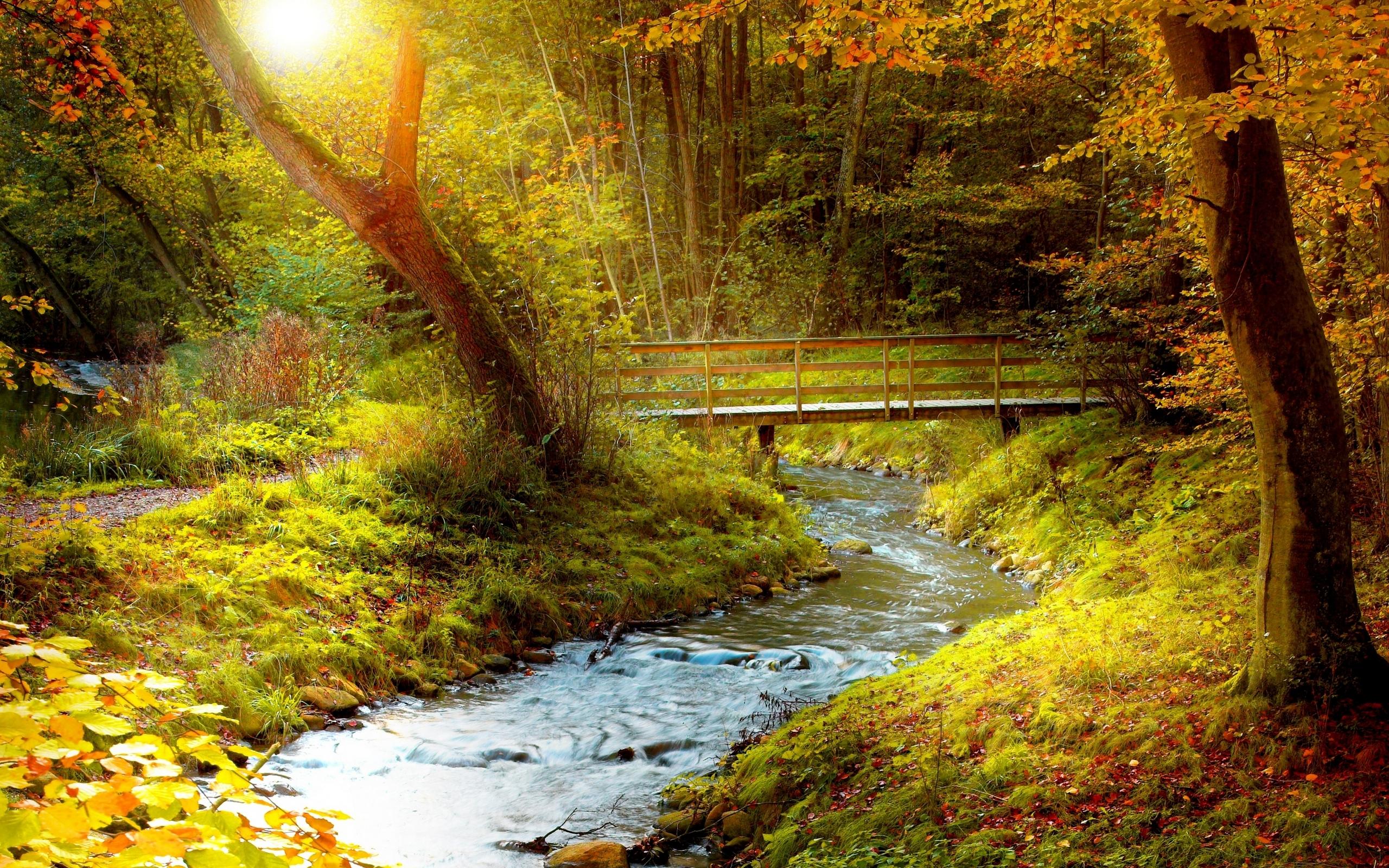Яркие картинки осени