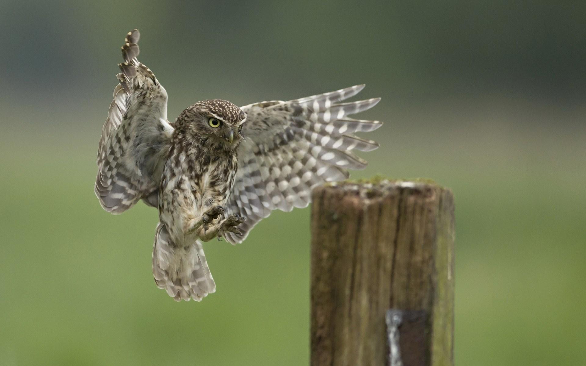 Stump Bird Owl Wings